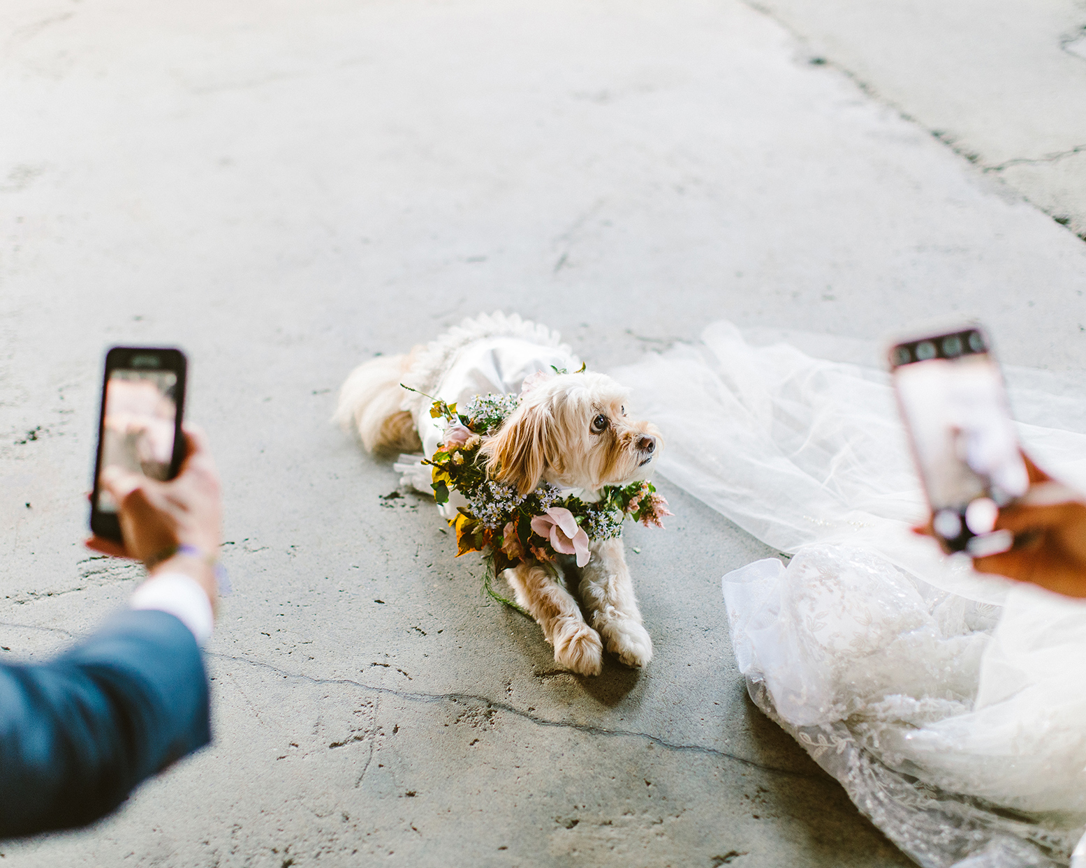 two people taking phone photos on dressed up dog on cement floor