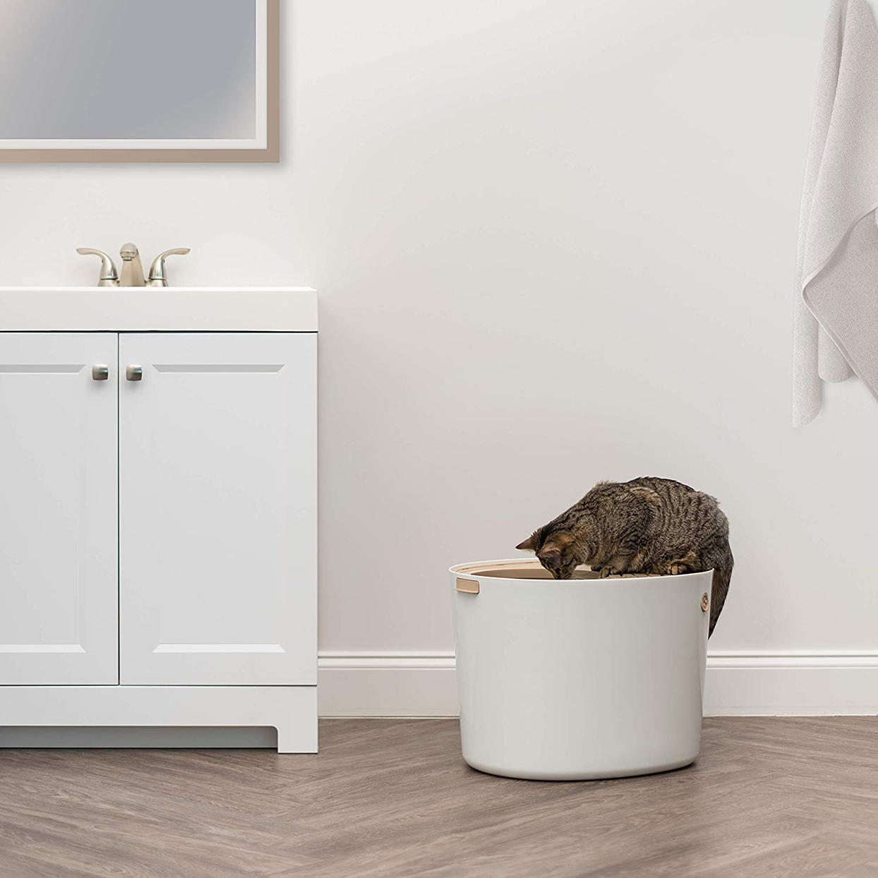 Look for a Litter Box with a Top Entrance