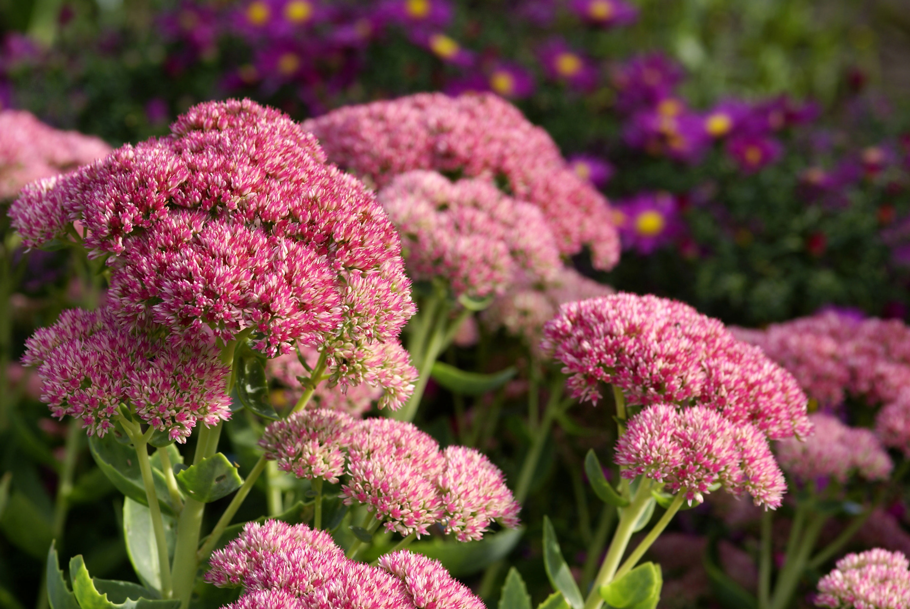 Your Guide to the Most Popular Fall Perennials