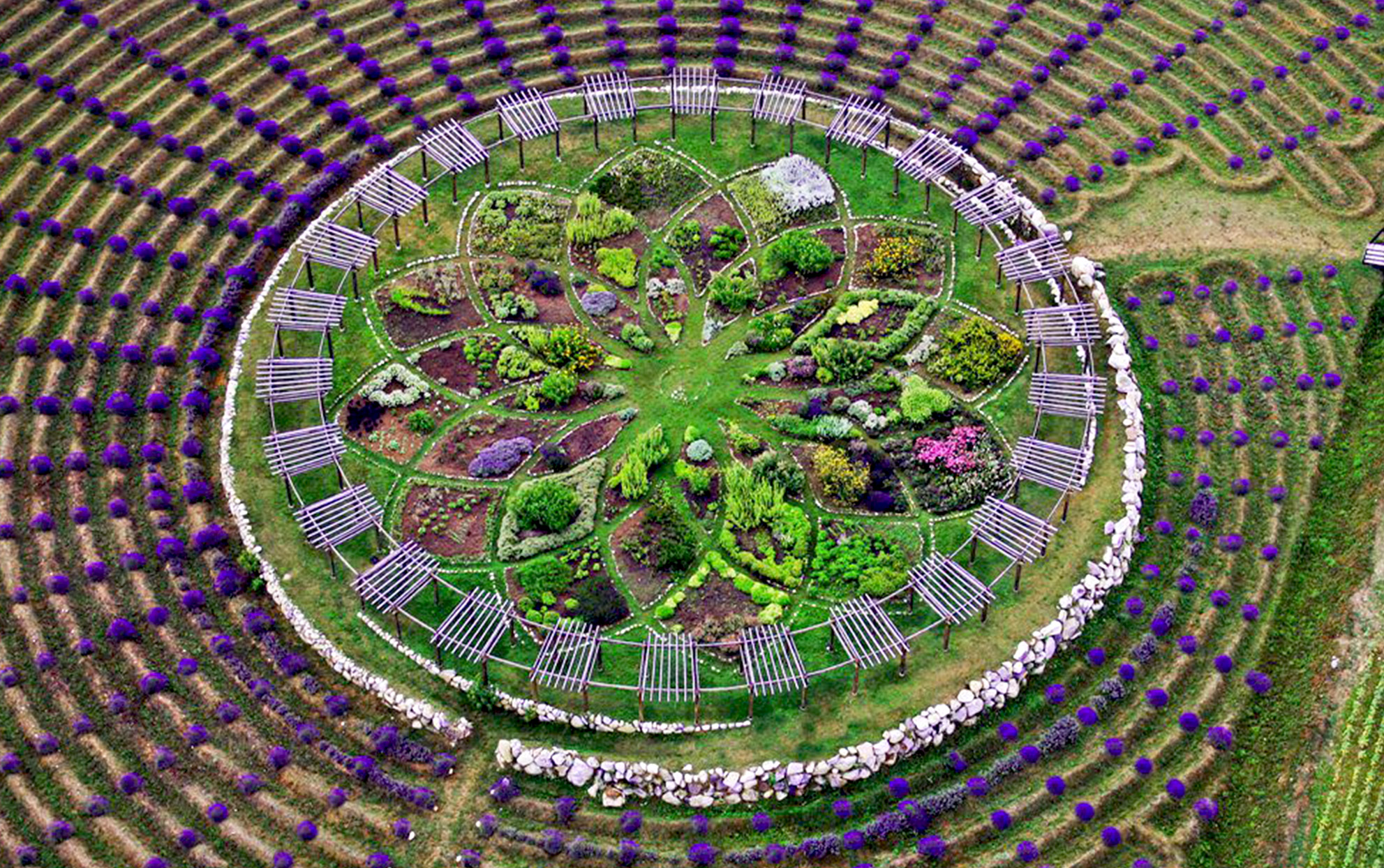 aerial view of the lavender labyrinth