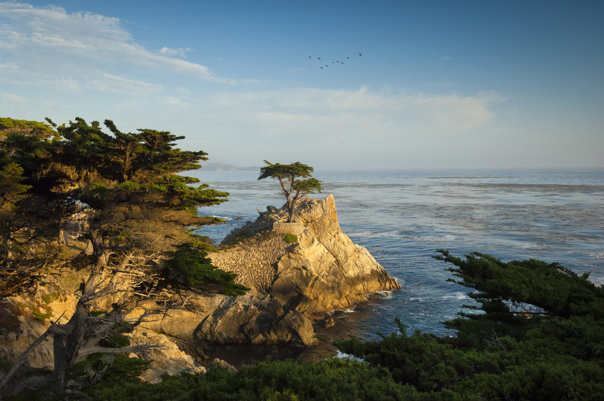 distant view of the Lone Cypress tree along shoreline