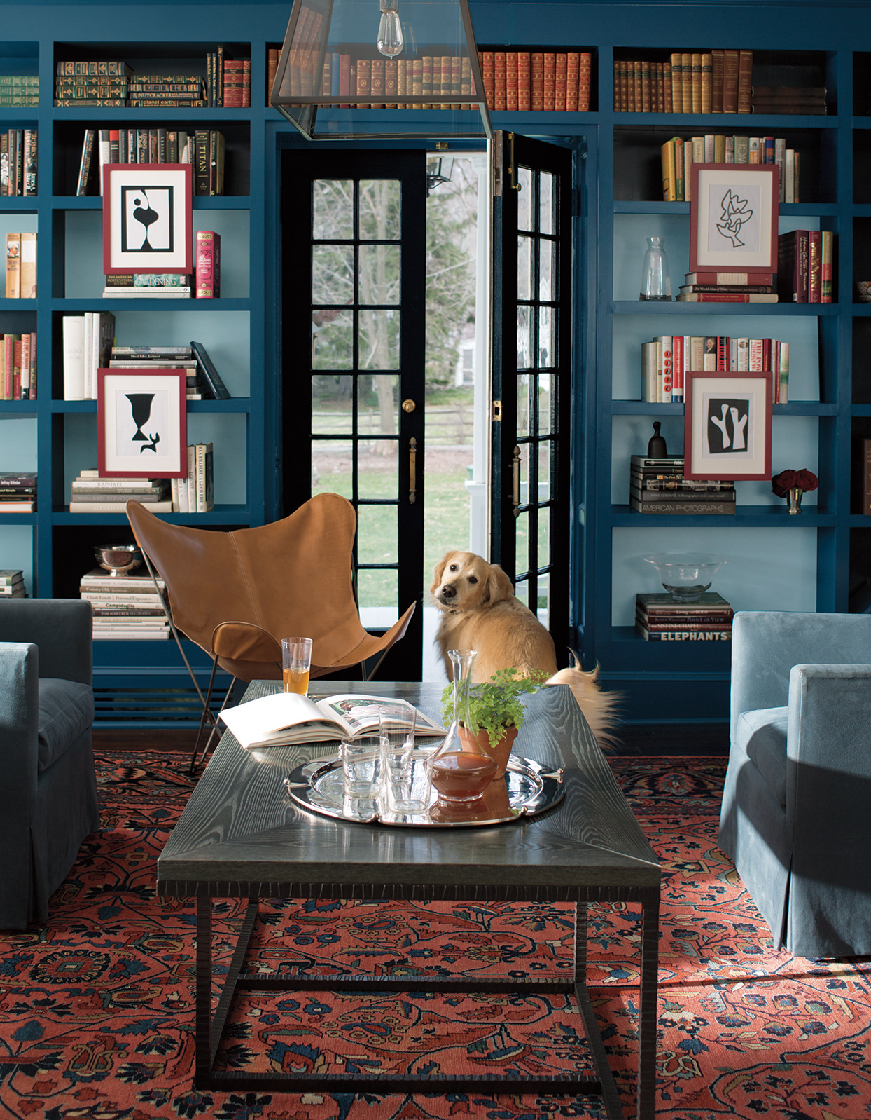 tonal blues and red library with dog