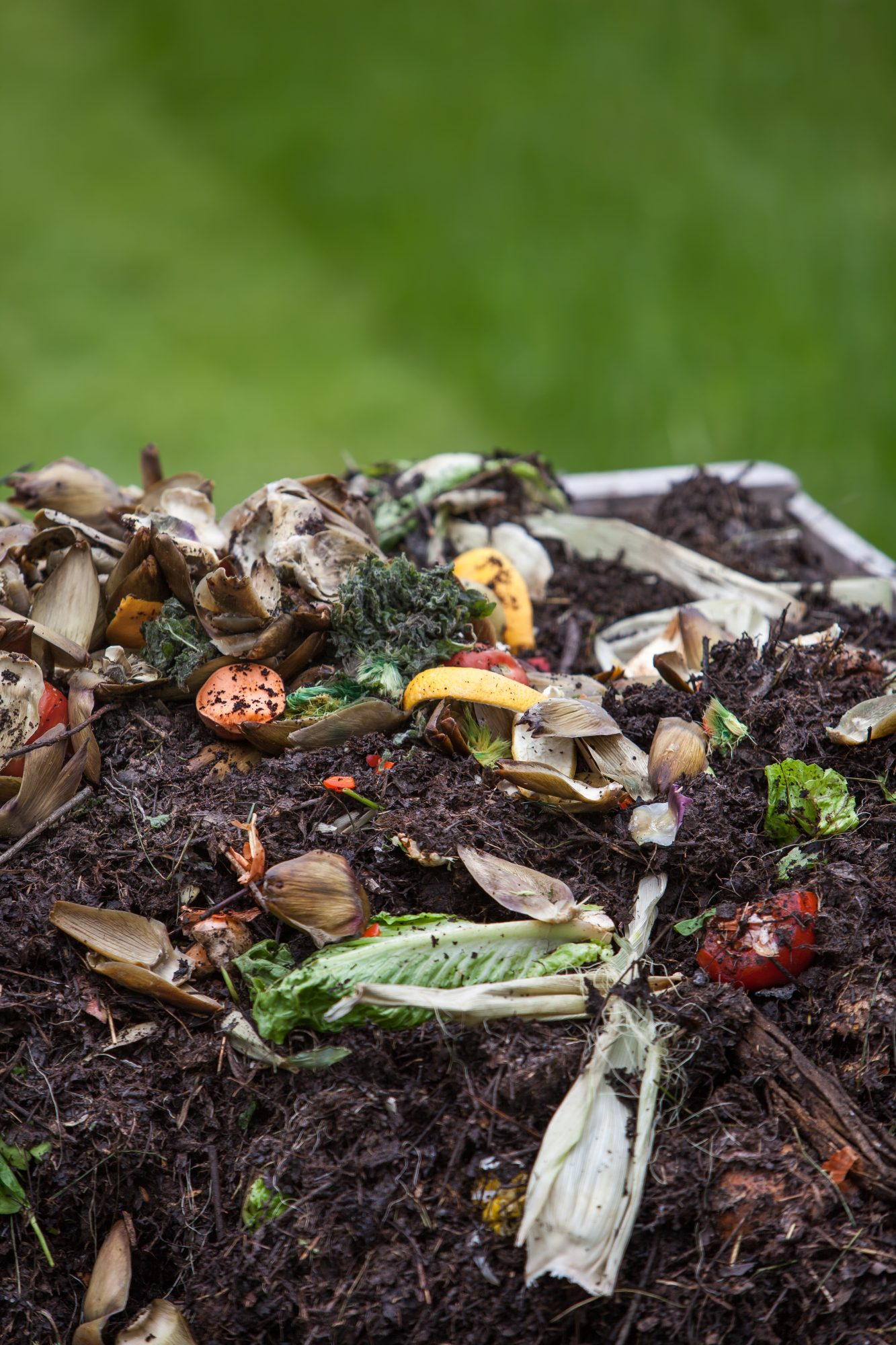 food scraps on top of compost pile