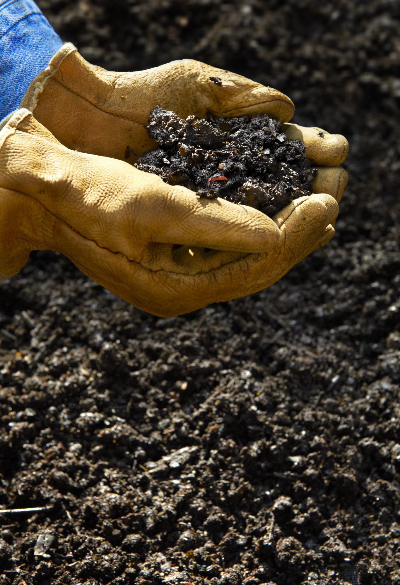 hands holding compost soil