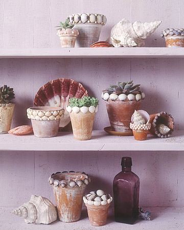 shell flowerpots on purple shells