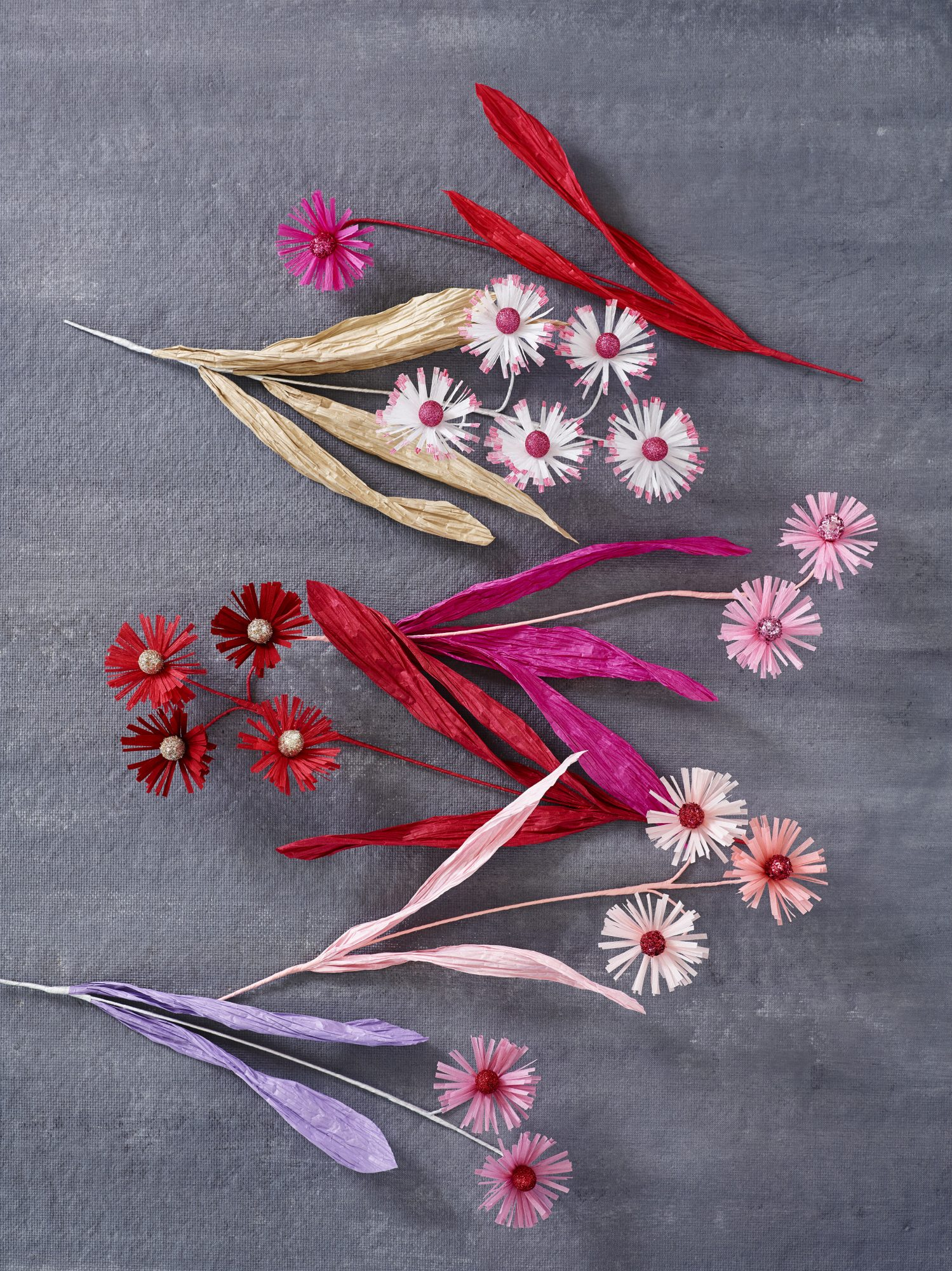 paper aster flowers