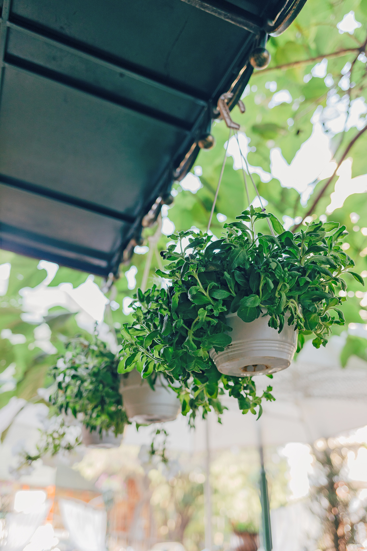 patio hanging plants from metal roof