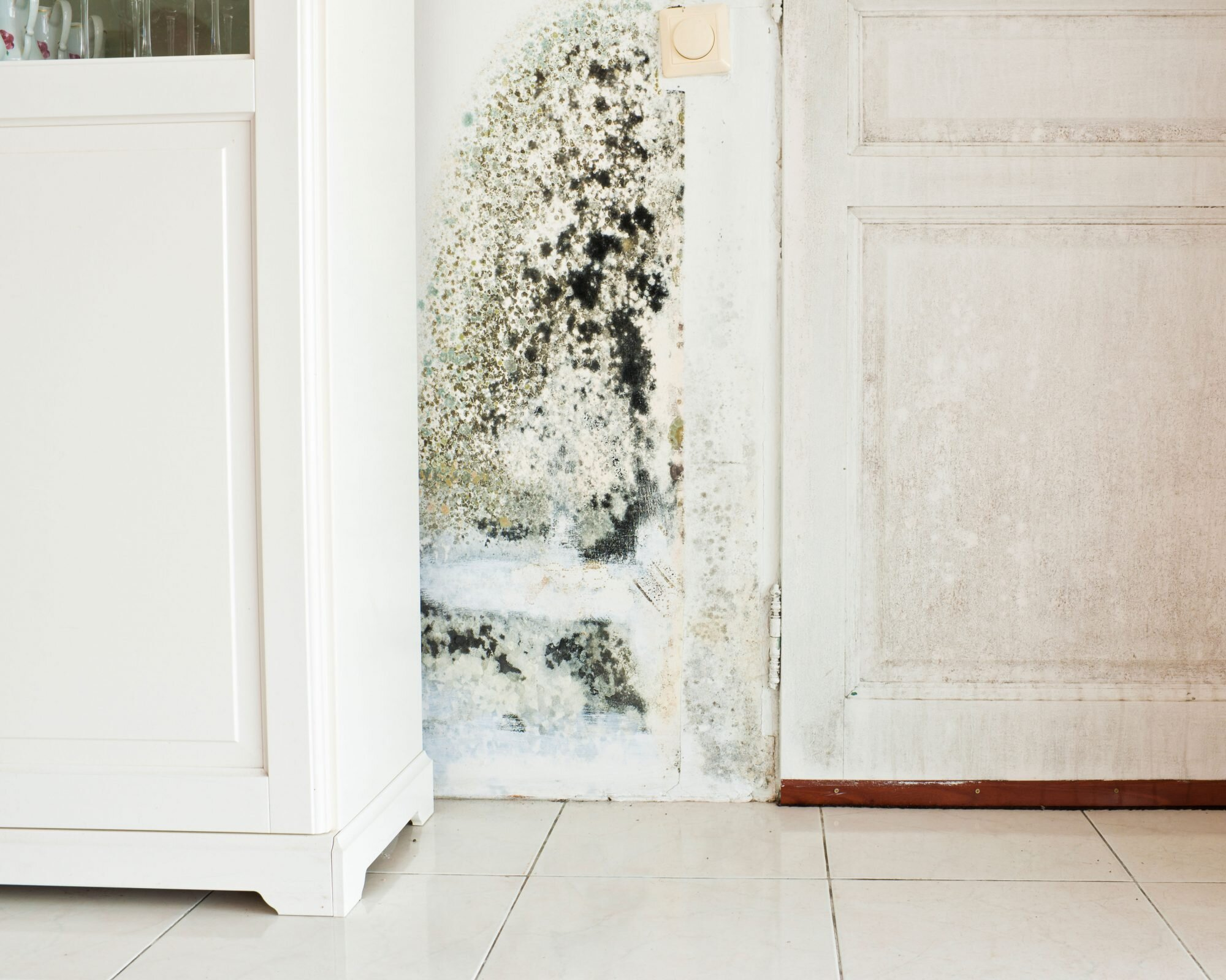 What to Do If You Find Black Mold in Your Home  Martha Stewart