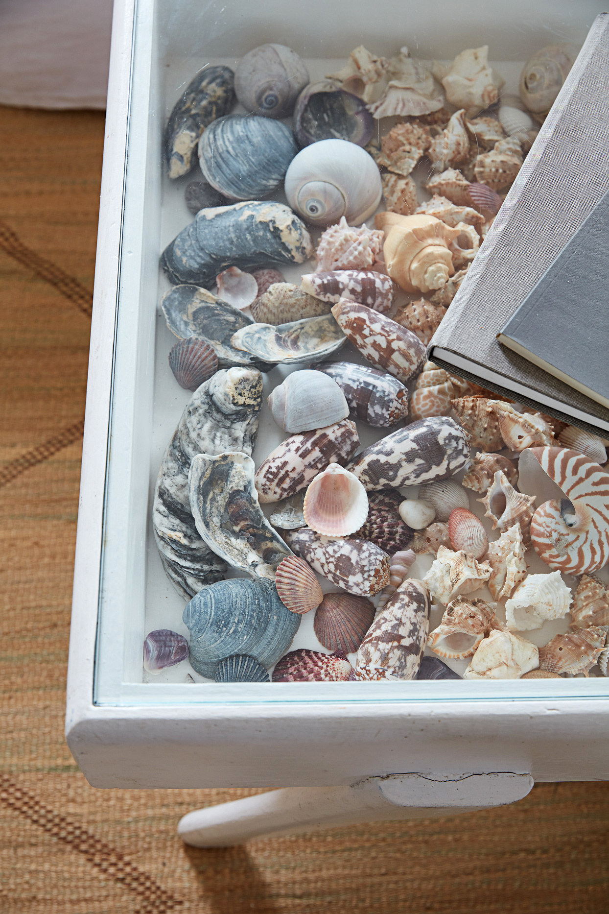 glass-topped coffee table containing seashells