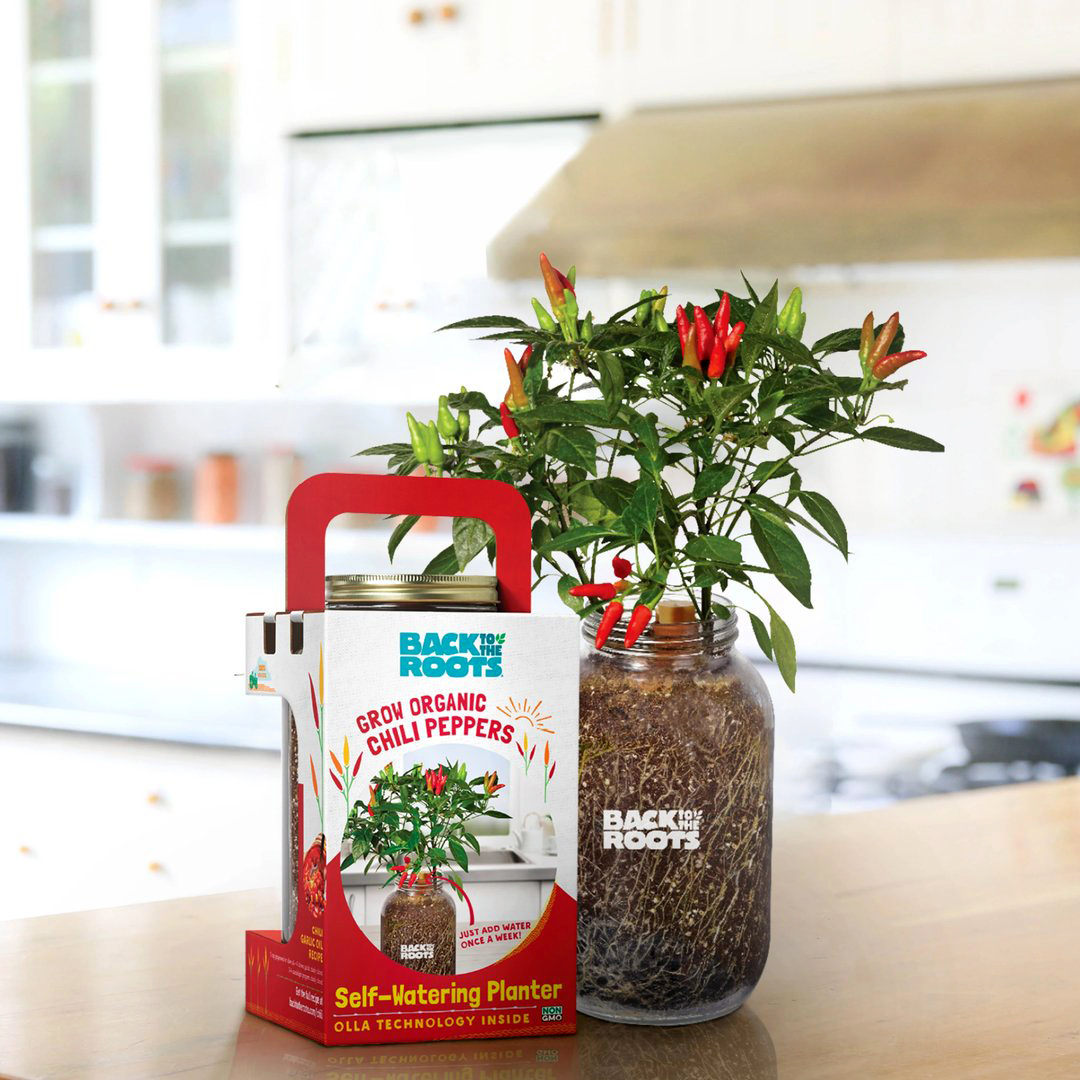 back to the roots organic chili pepper grow kit