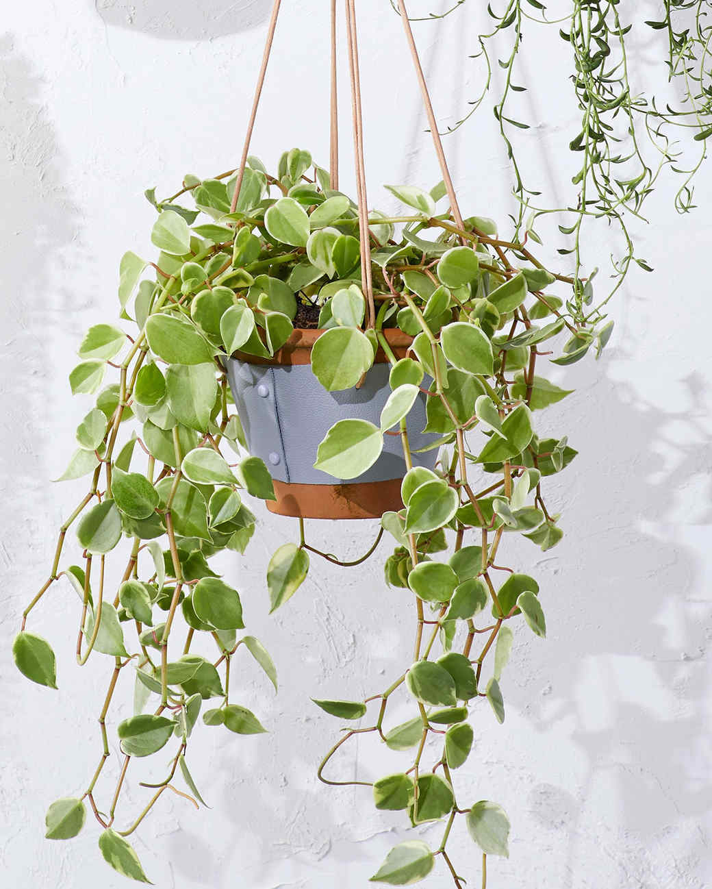 wrapped leather plant hanger