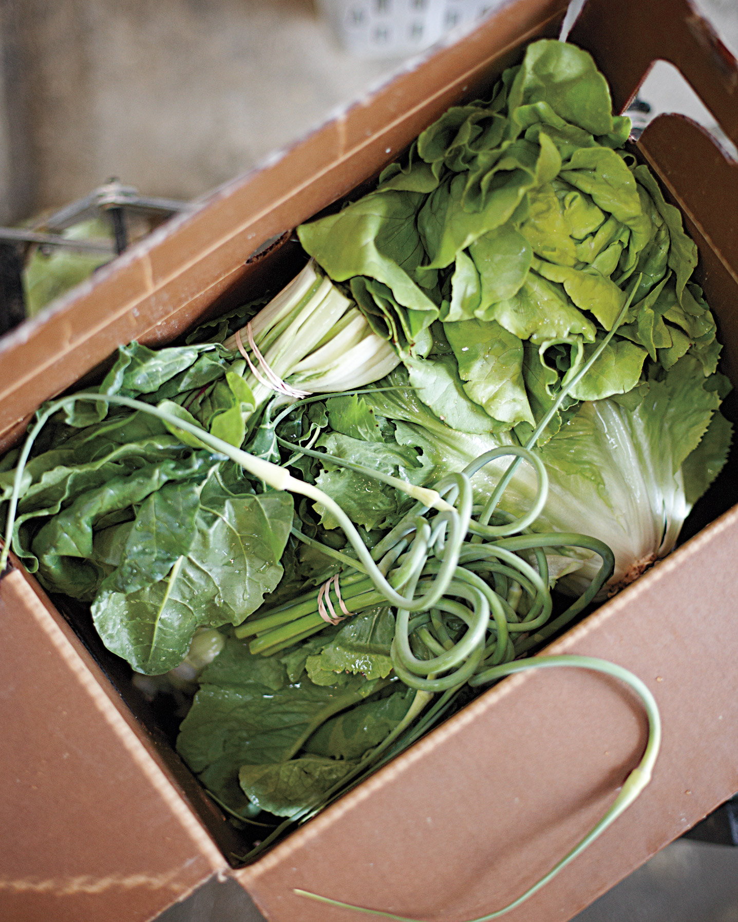 box of vegetables including lettuce, Swiss chard, garlic scapes