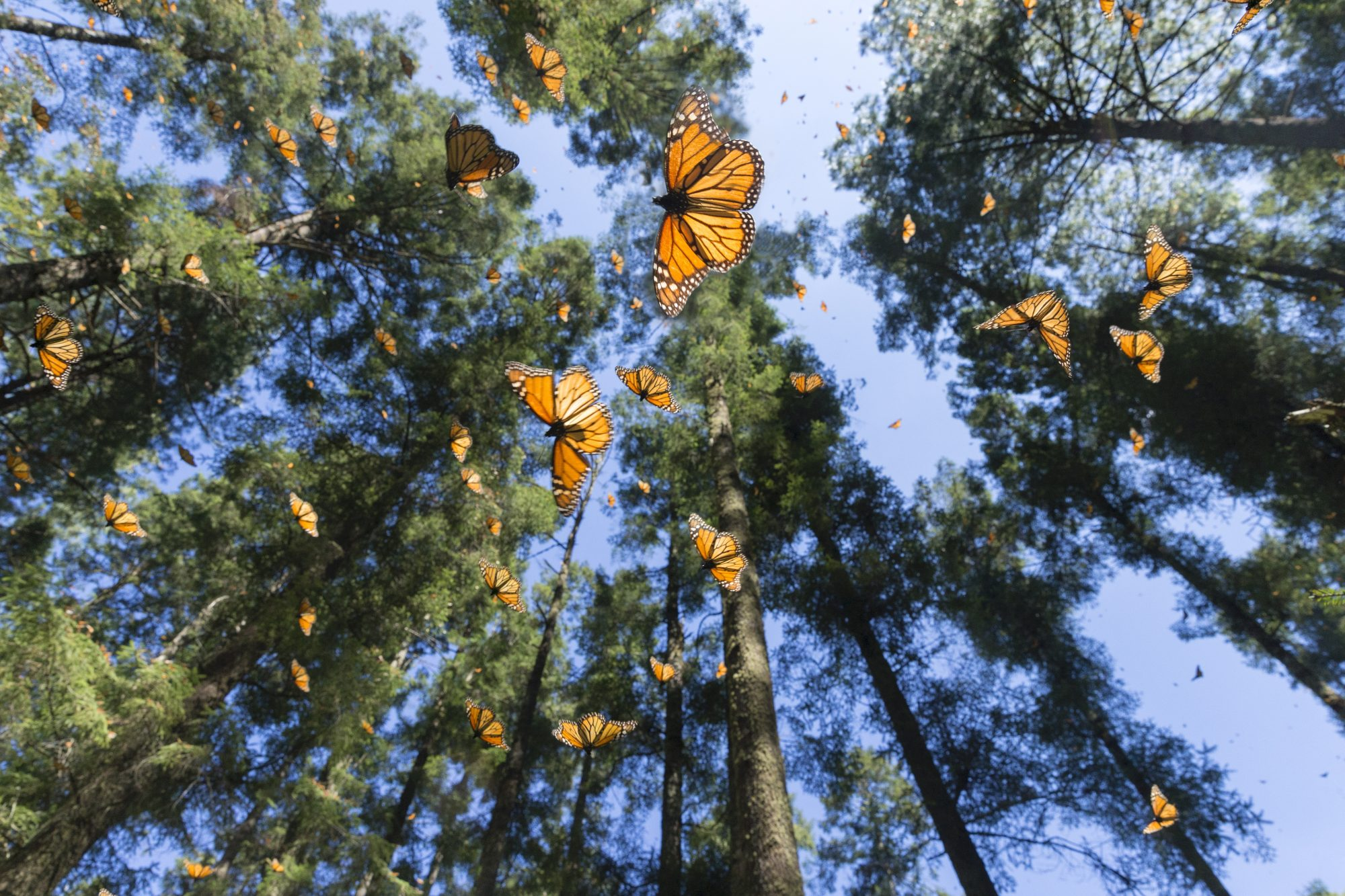 butterflies circling the air in a forest
