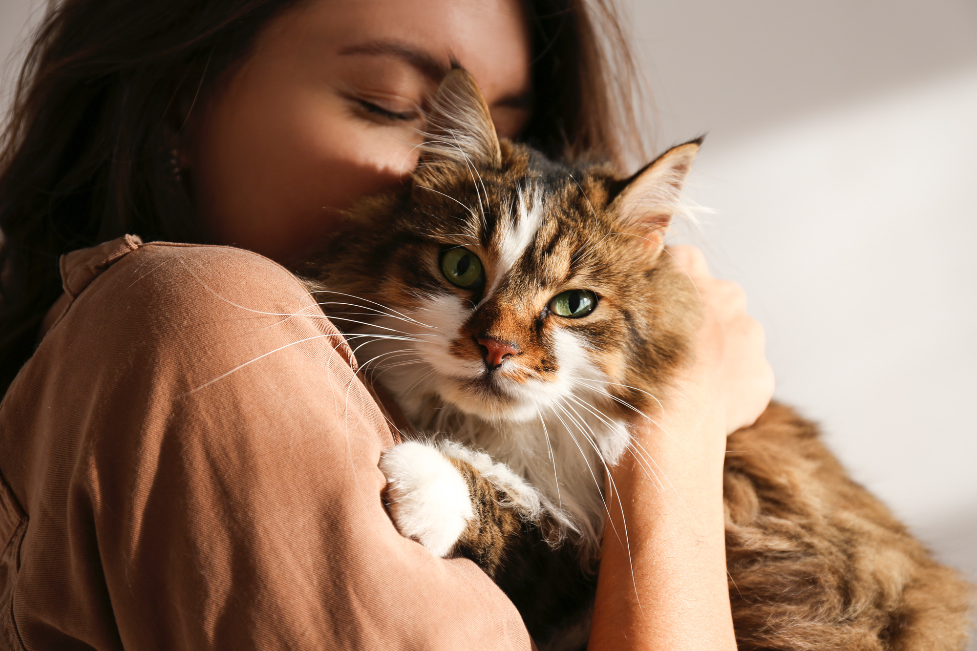 close-up of woman cuddling a tabby cat