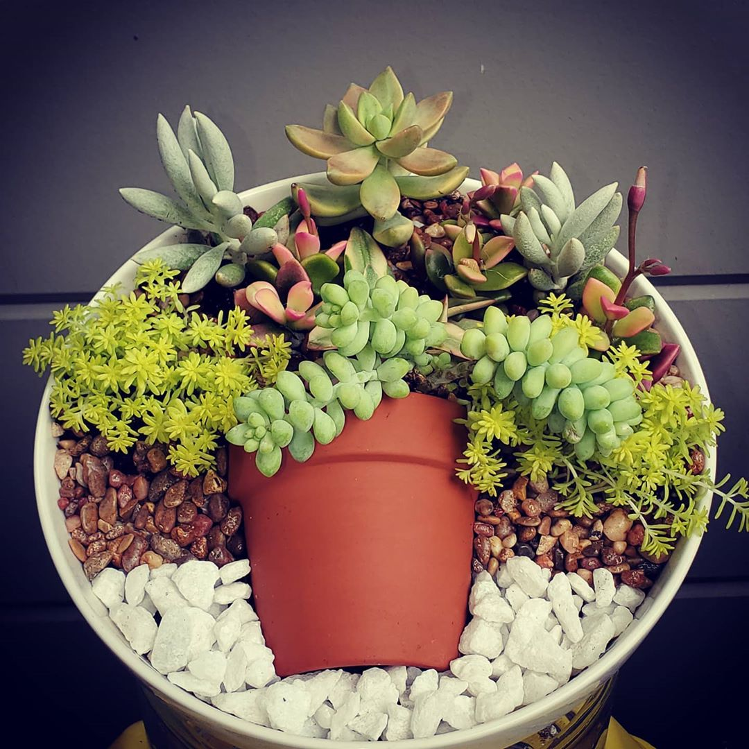 succulent garden dish display