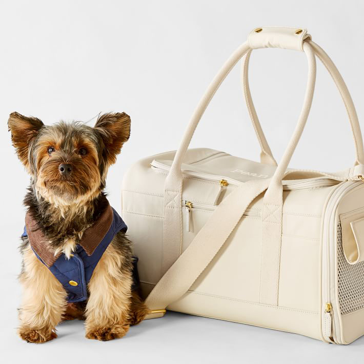small dog sitting next to Mark & Graham ivory Buddy Pet Carrier