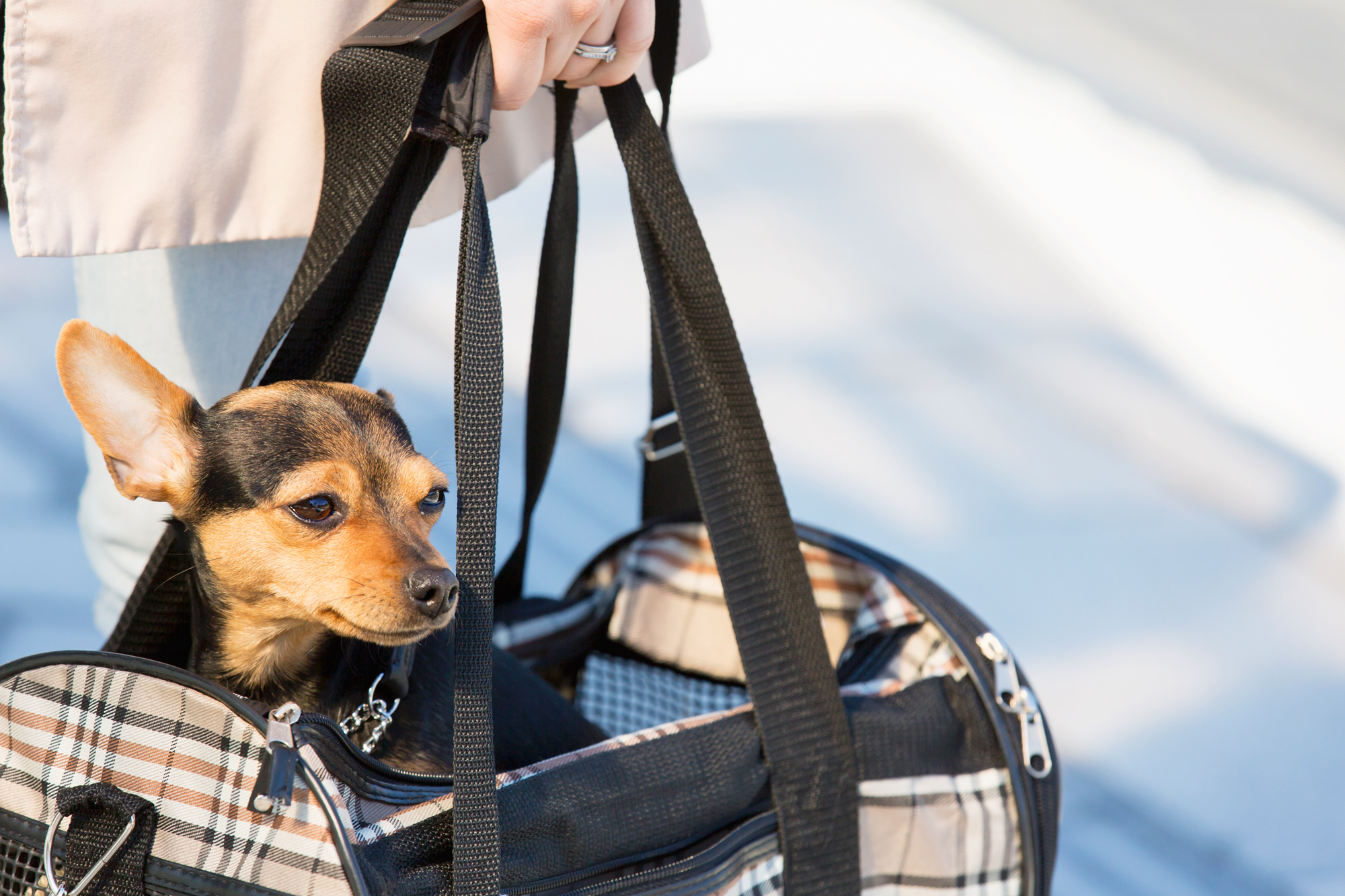 small dog being carried in plaid carrier