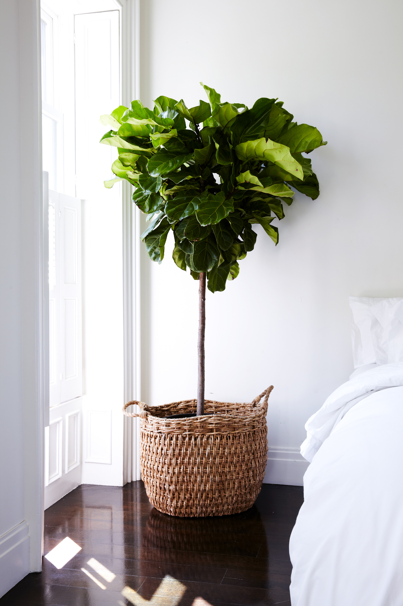 plant in basket next to a white bed