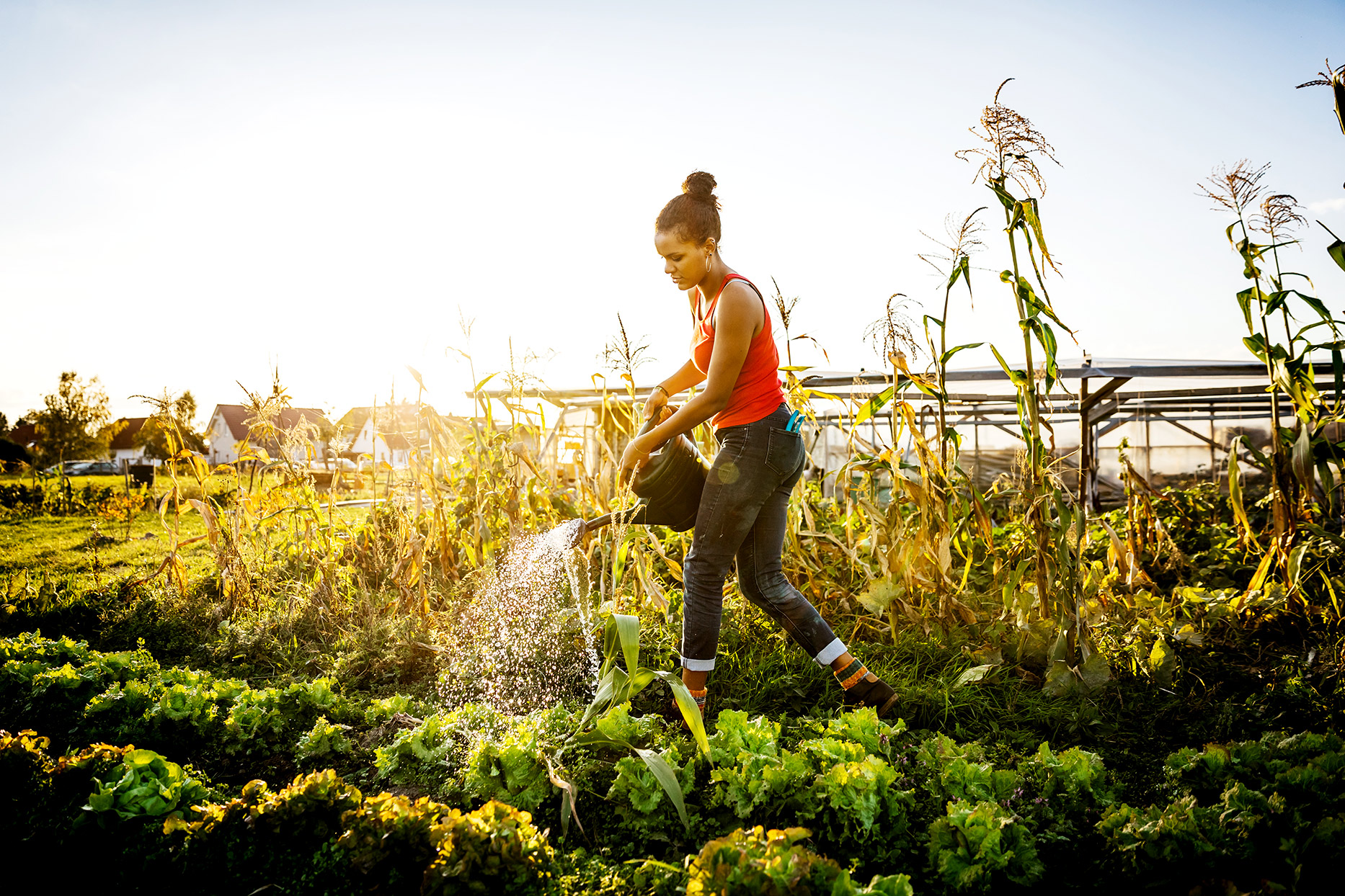 Person watering crops