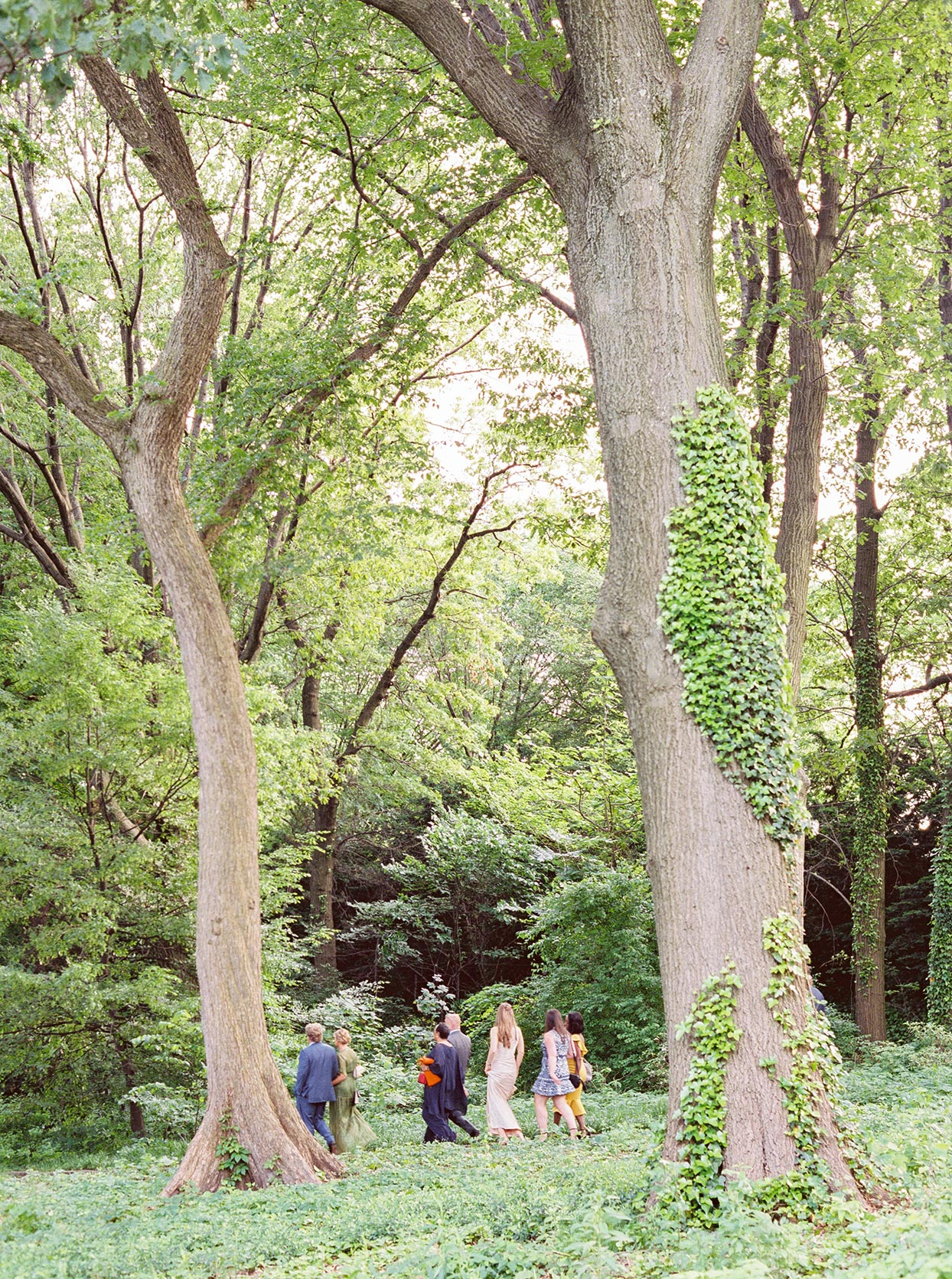guests walking through lush park for wedding