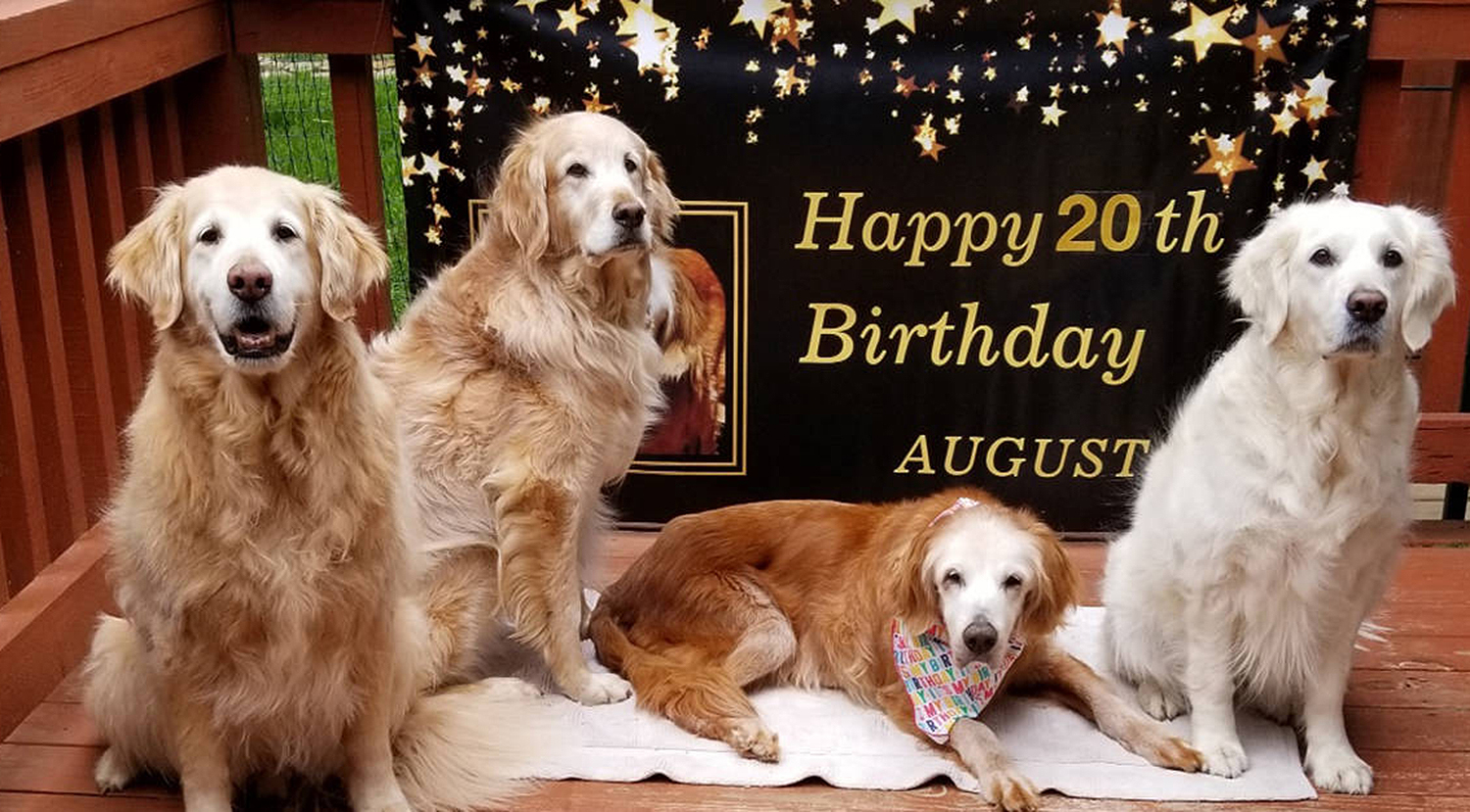 Augie the dog celebrating 20th birthday with friends