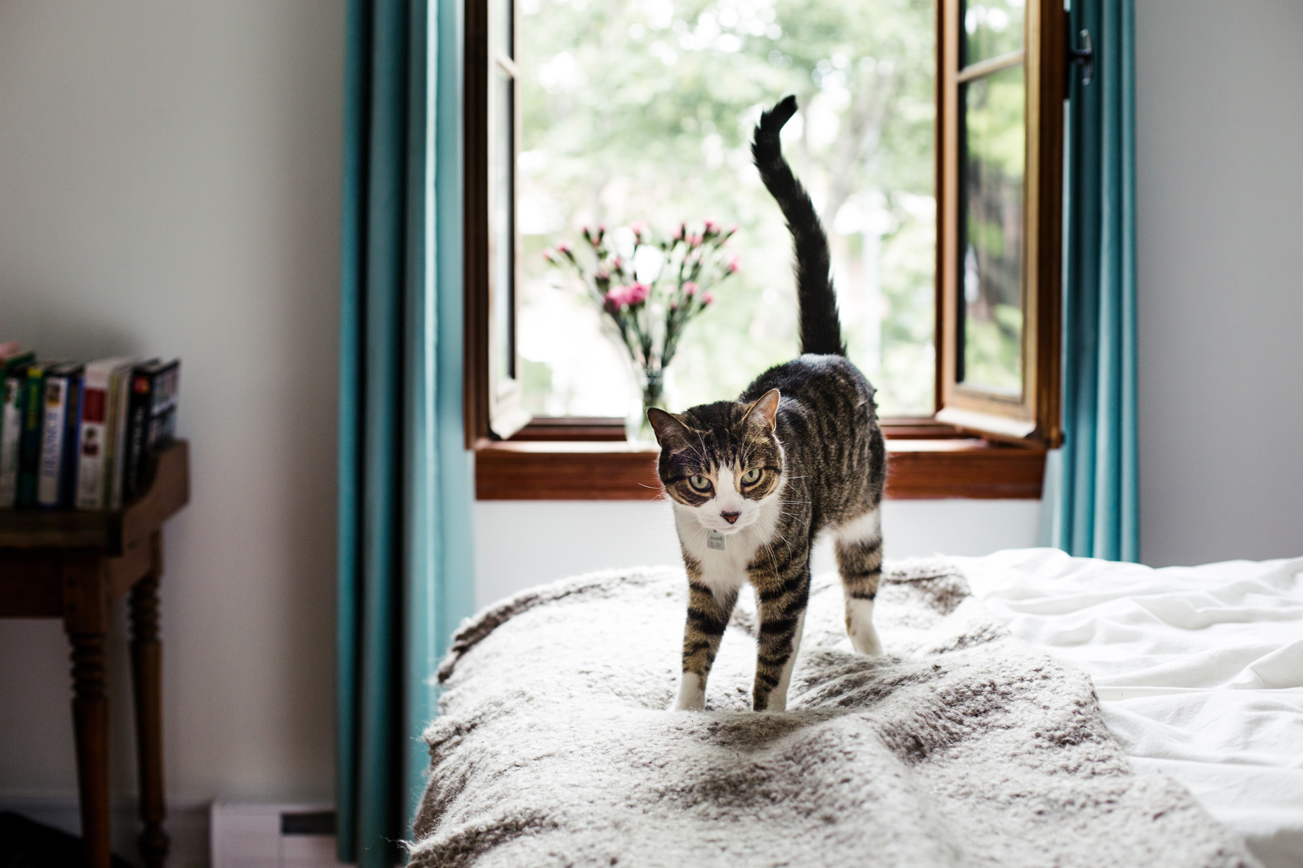 tabby cat standing on white bed