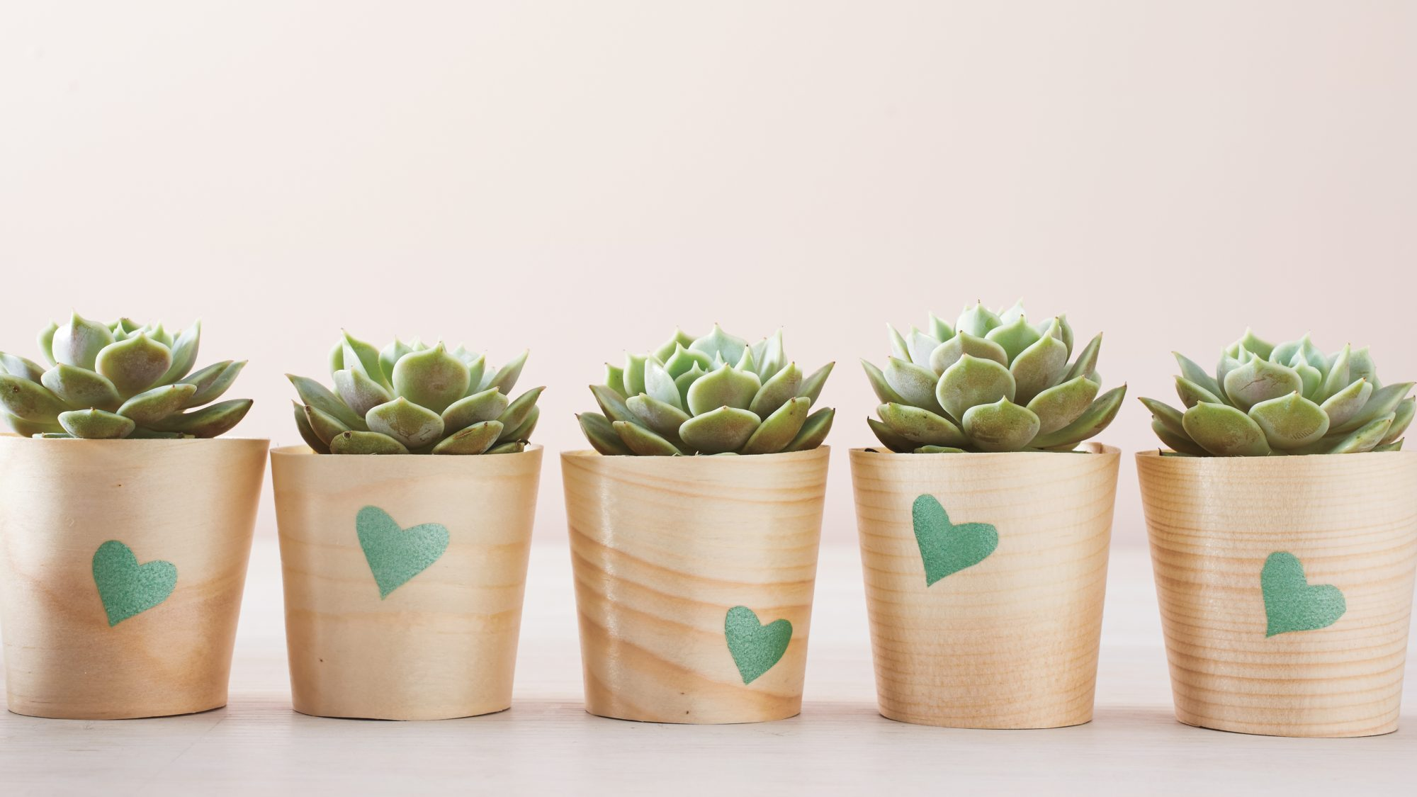 """This gift is perfect for the classroom or a teacher's home. To create, first cut a heart shape out of the stencil film, then stick the film on an inexpensive wooden cup. Dab the paint on the stencil, then peel the film off. Make as many as you need, then transfer a small plant into each cup. We used succulents, but just about any greenery you like should work.Shop Now: Moyishi Natural Solid Wooden Cups, $22.98, amazon.com; Impress Stencil Film, 16"""" by 20"""", walmart.com; Martha Stewart Crafts Multi-Surface Satin Acrylic Paint, $7, amazon.com."""