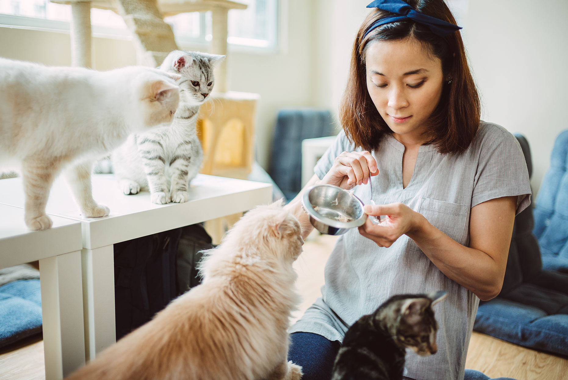 woman feeding four cats