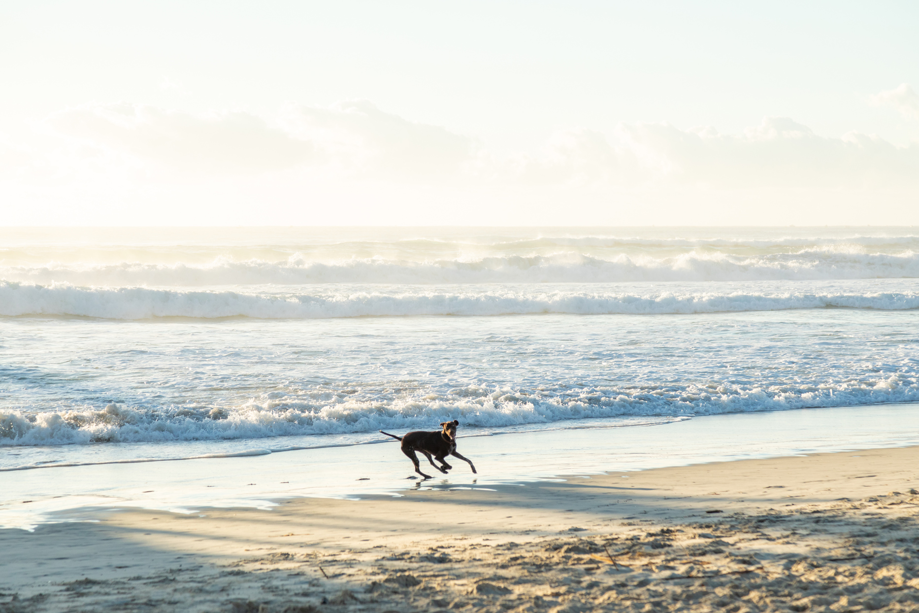 dog playing on the beach