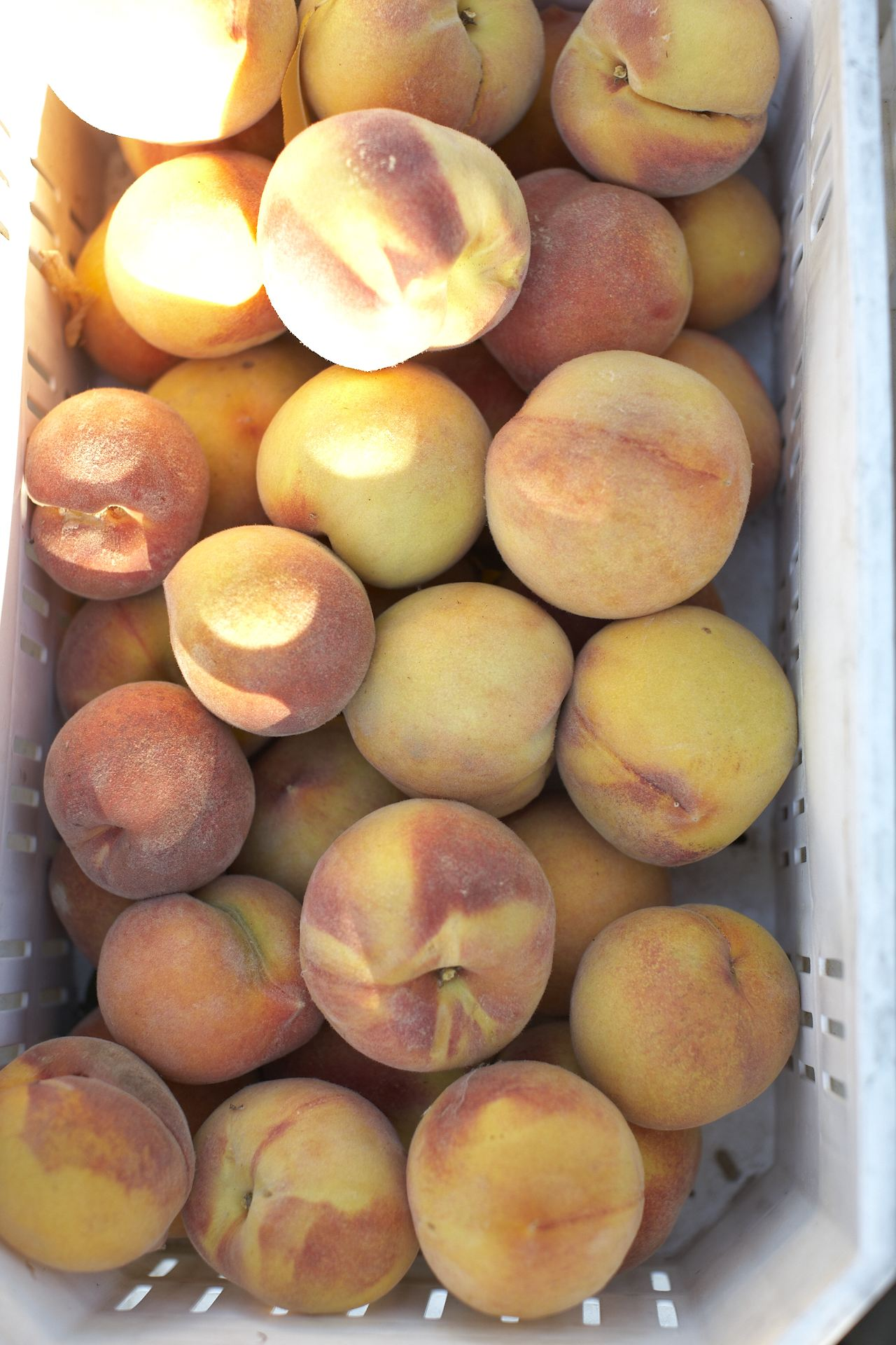 orchard peaches in container