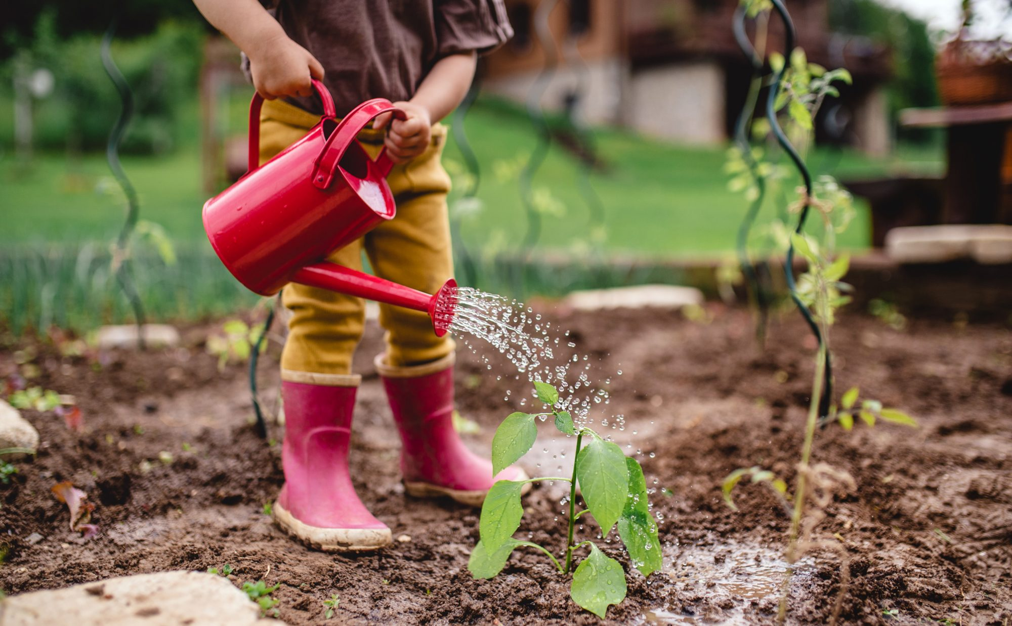 small child in red rain boots using red watering can in garden