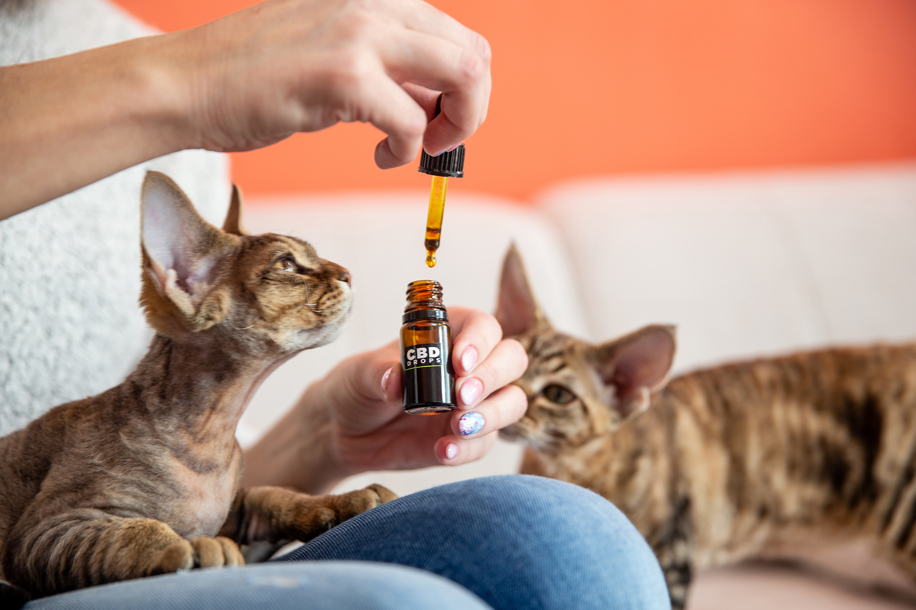 Female Pet Owner Giving Her Cat CBD Oil Drops as Alternative Therapy
