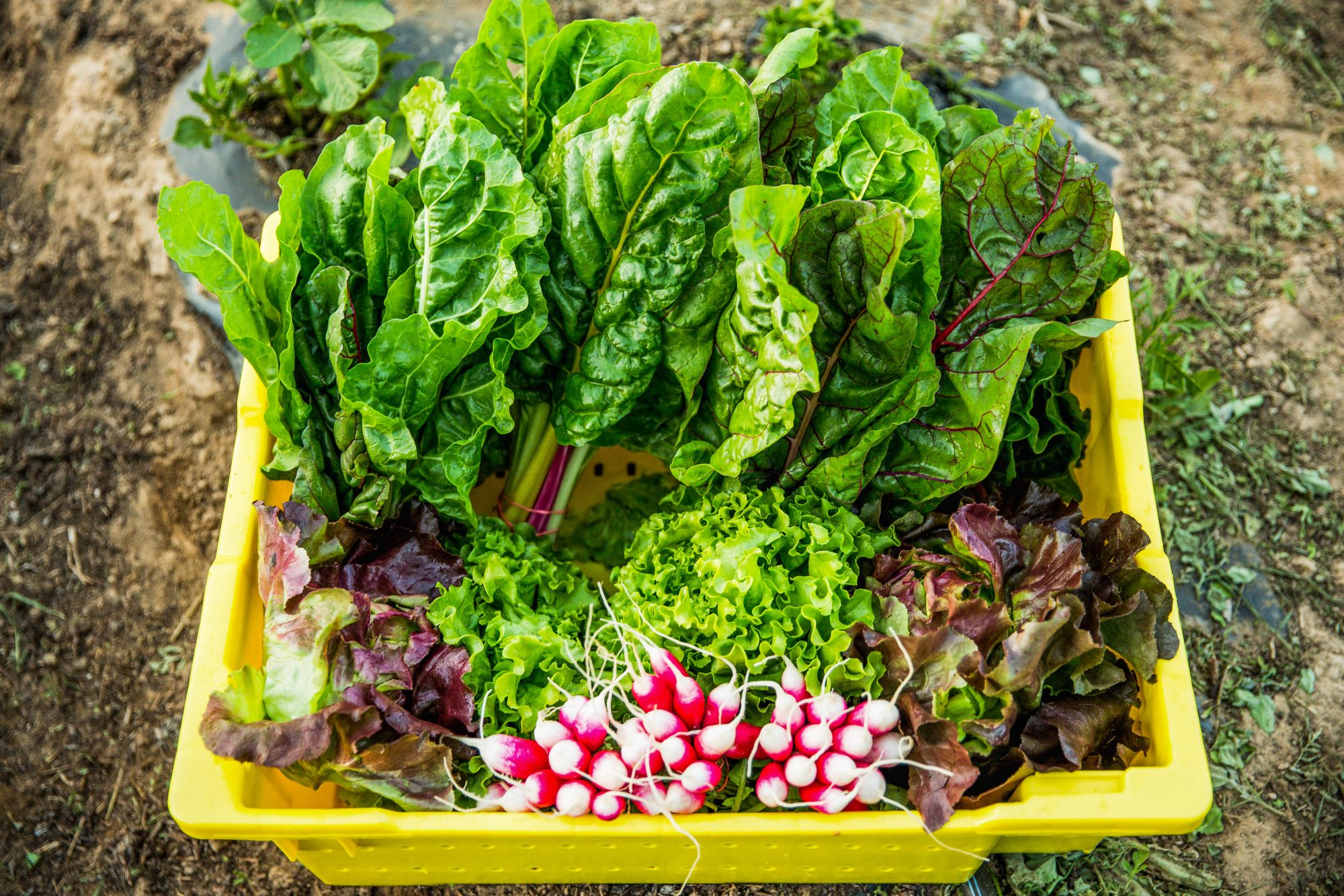 swiss chard and other vegetables