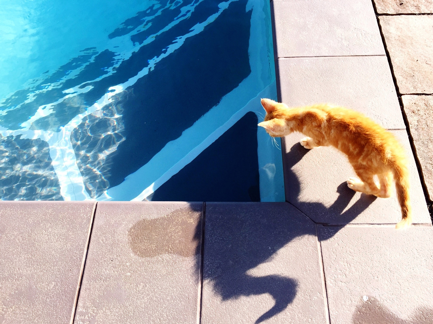 small ginger cat walking by outdoor pool