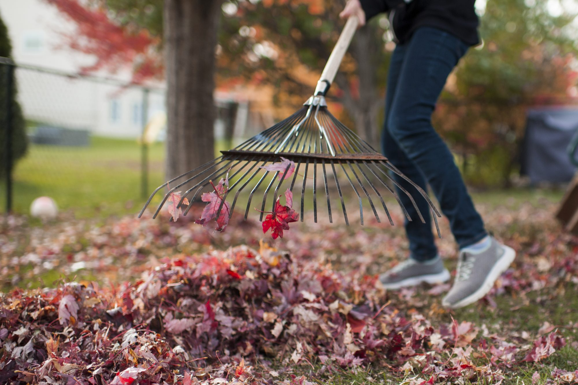 woman raking red leaves in fall