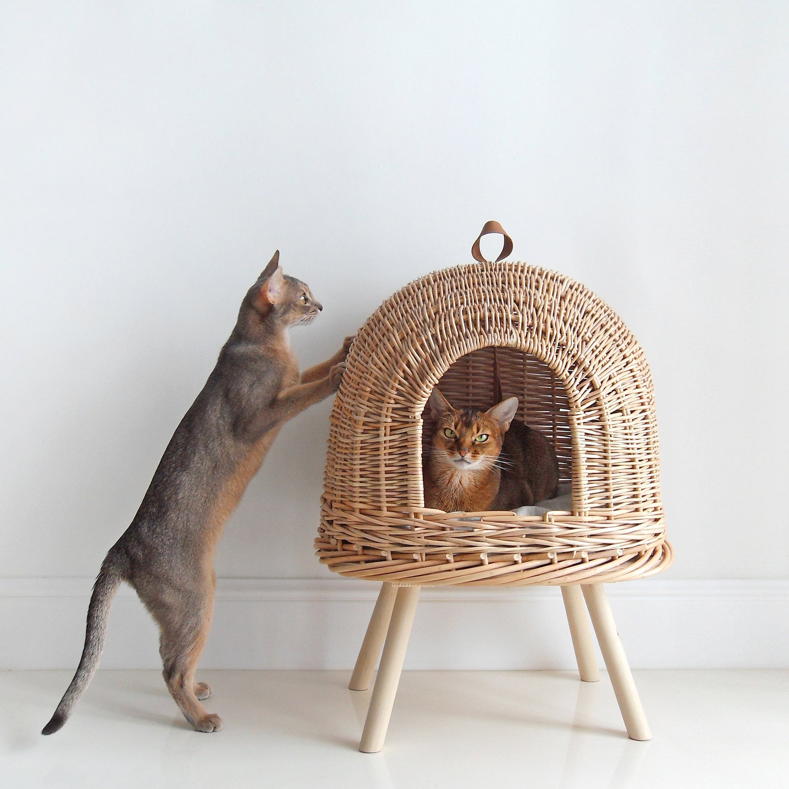 two cats and the Hunting Pony Natural Wicker Cat Bed