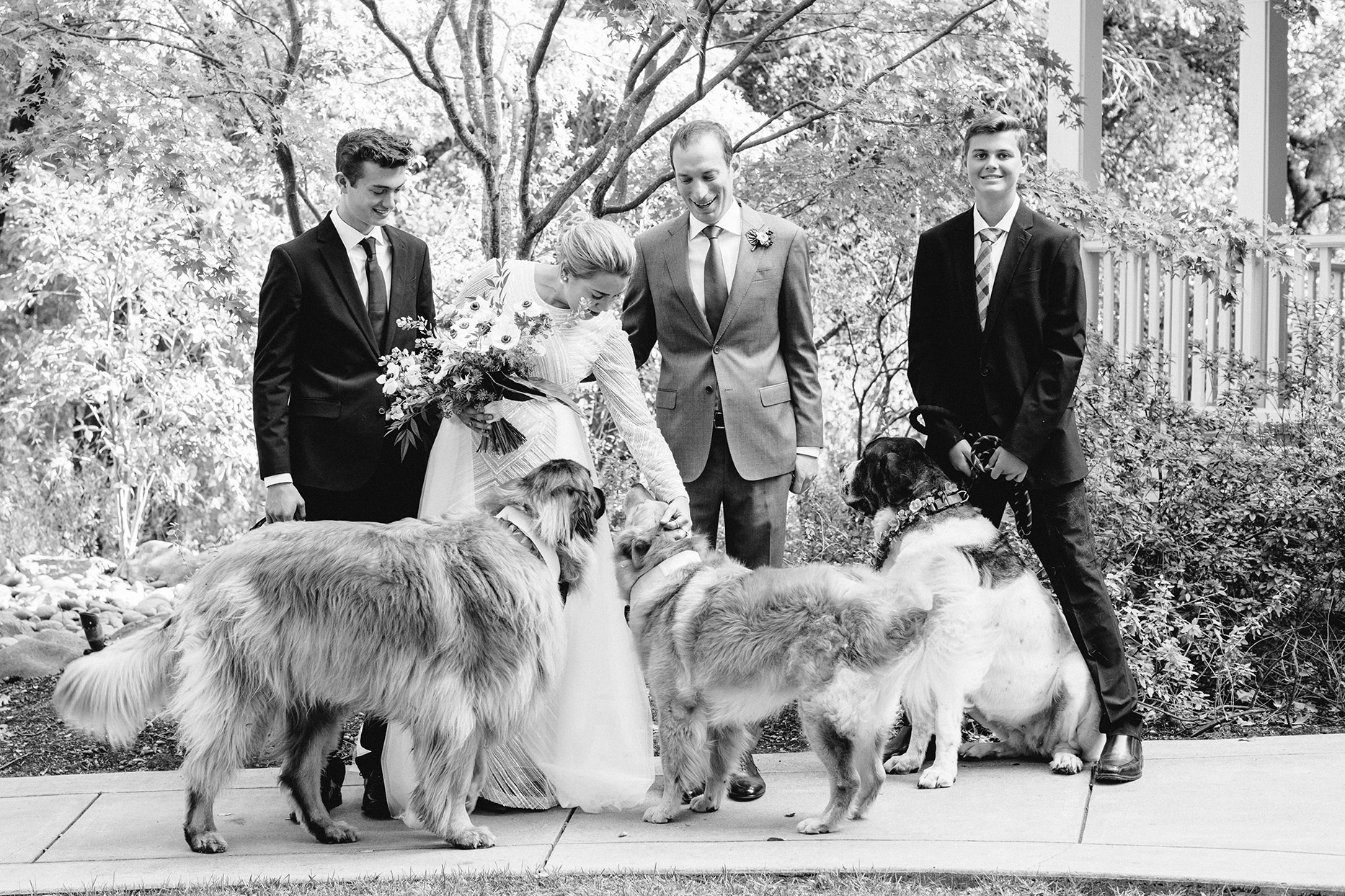 bride and groom smiling with their three large dogs