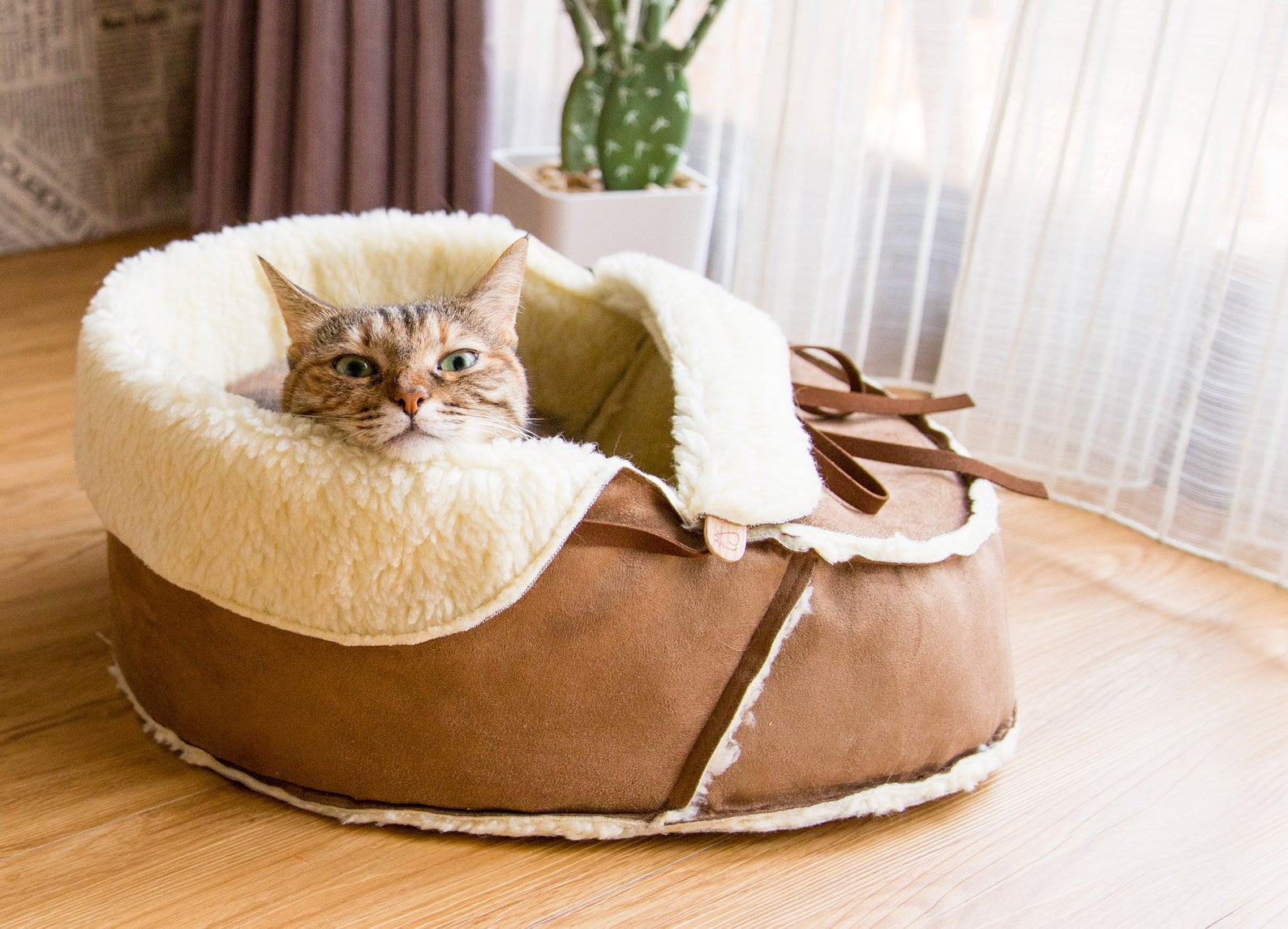cat resting in moccasin shoe cat bed