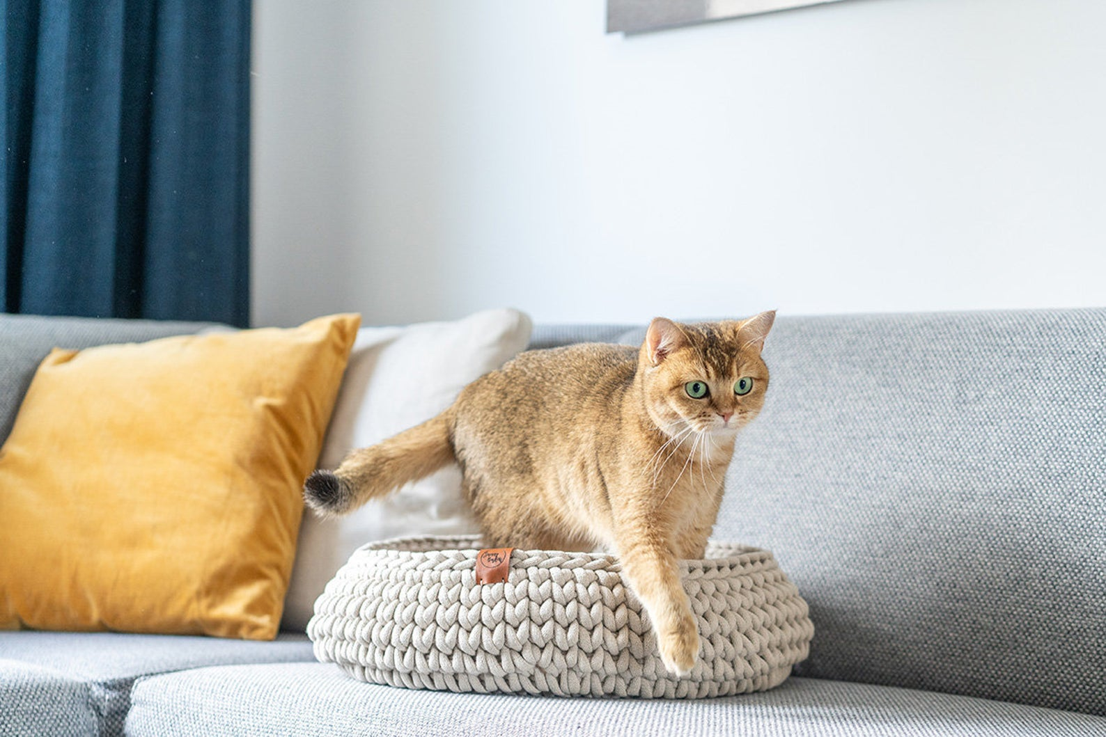 cat walking out of cat bed on couch