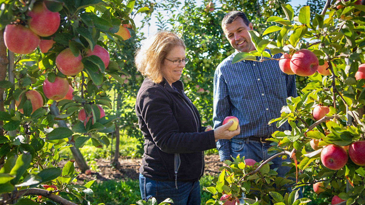 Susan Brown and Kevin Maloney observing new apple varietal at Geneva Orchard