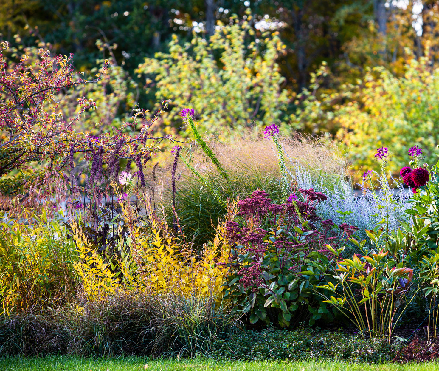 full garden featuring fall flowers and foliage