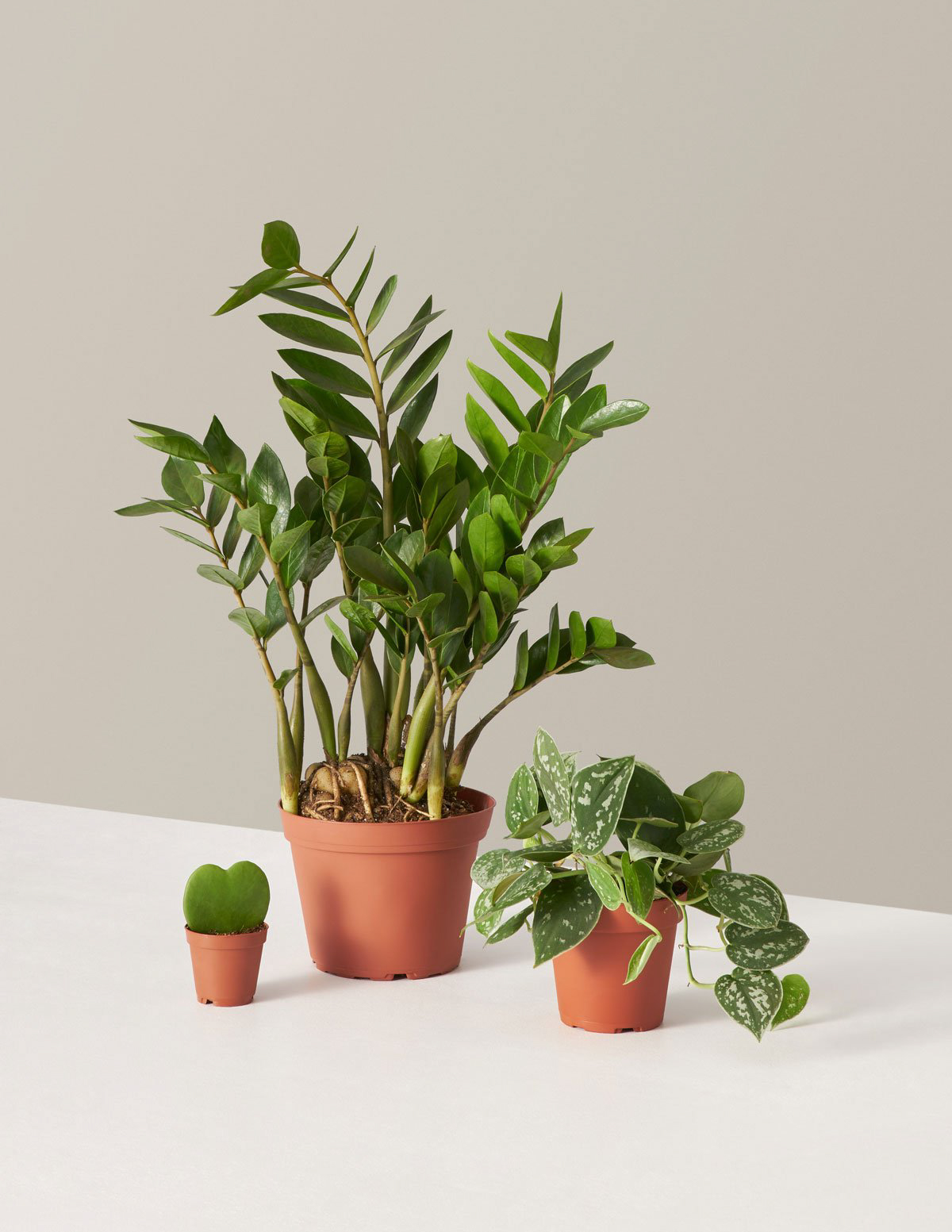 "The Sill ""Plant Parent"" Set"