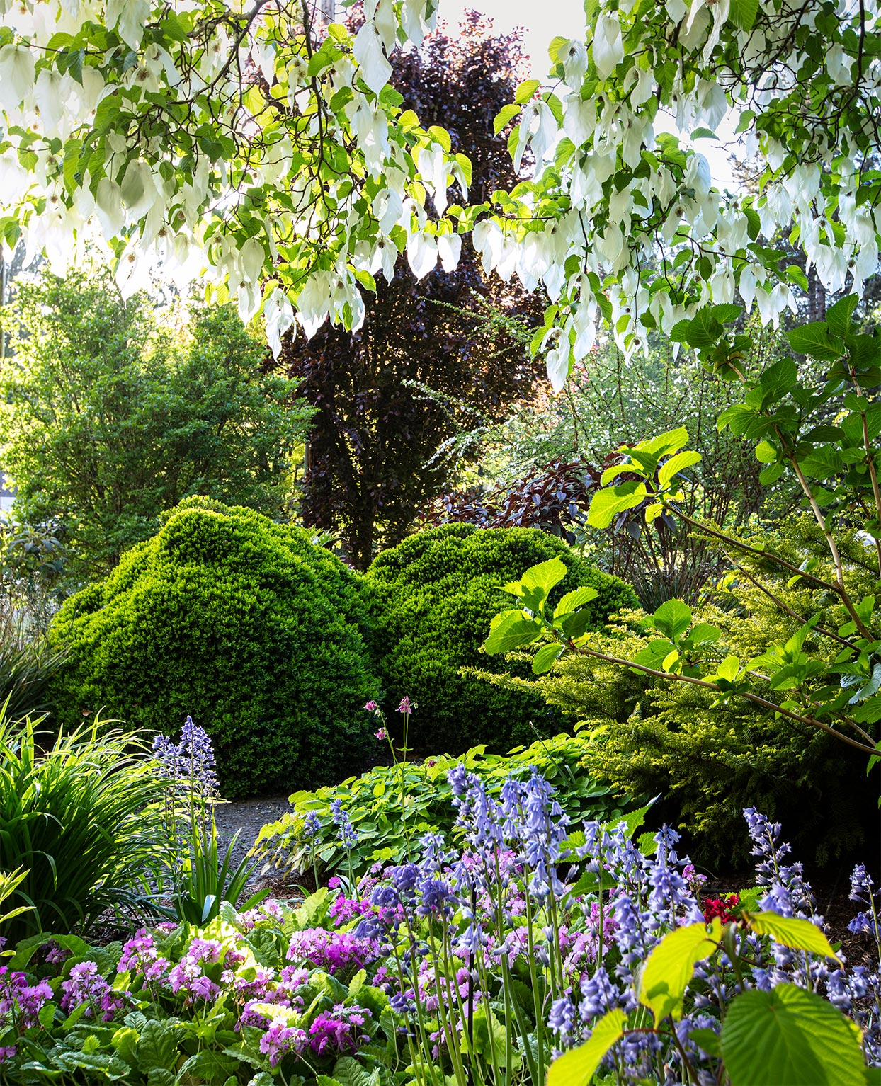 a colorful collection of flora and boxwood