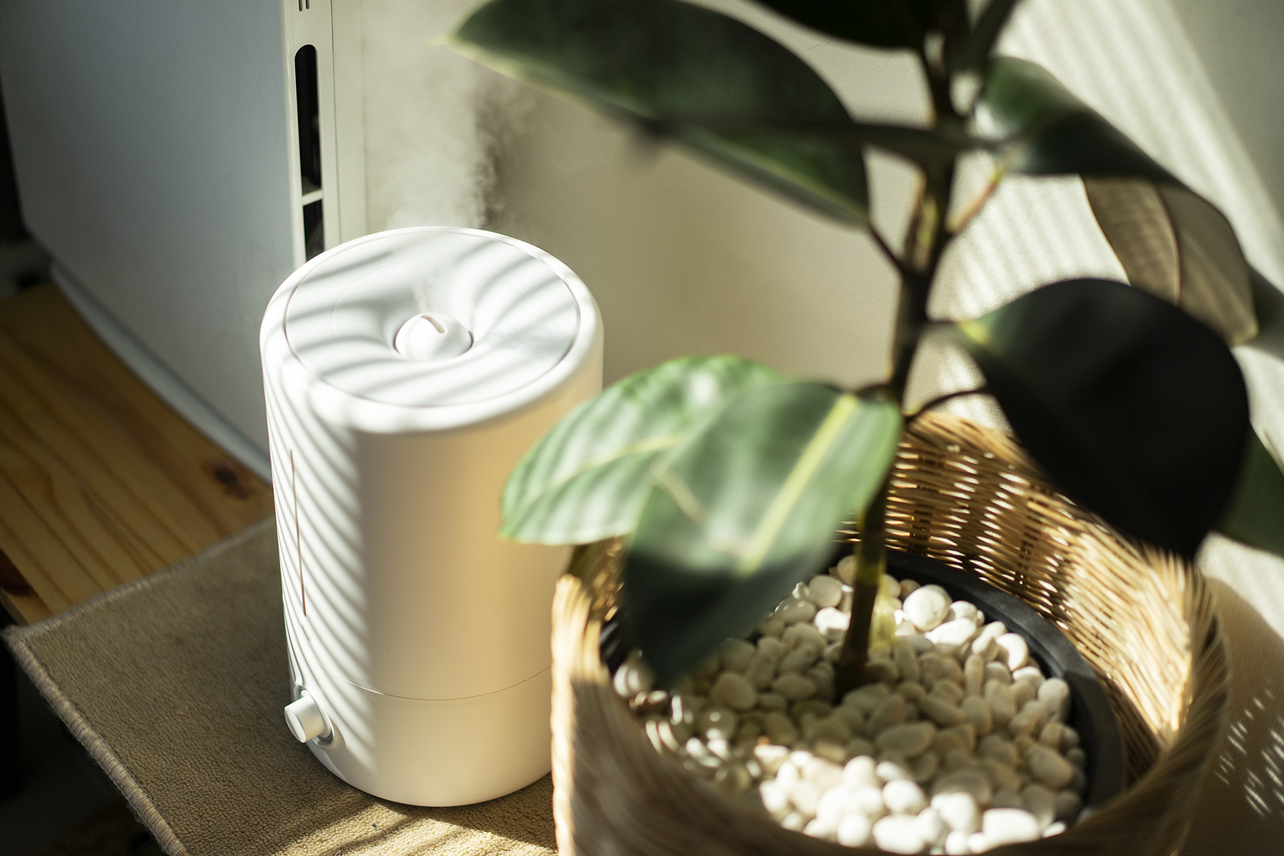 Close up Air Humidifier machine with Air Purifier tree with light from window