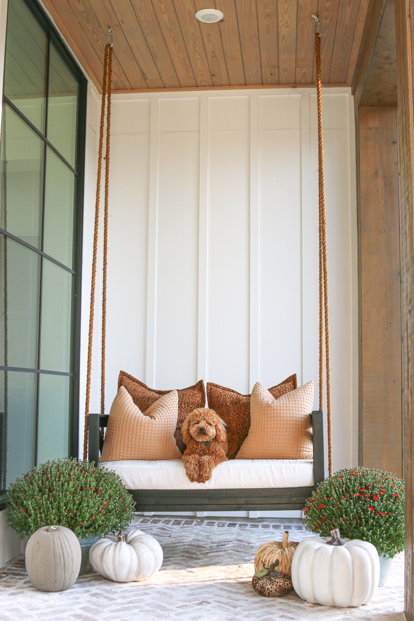 fall porch labradoodle on swing florals and pumpkins
