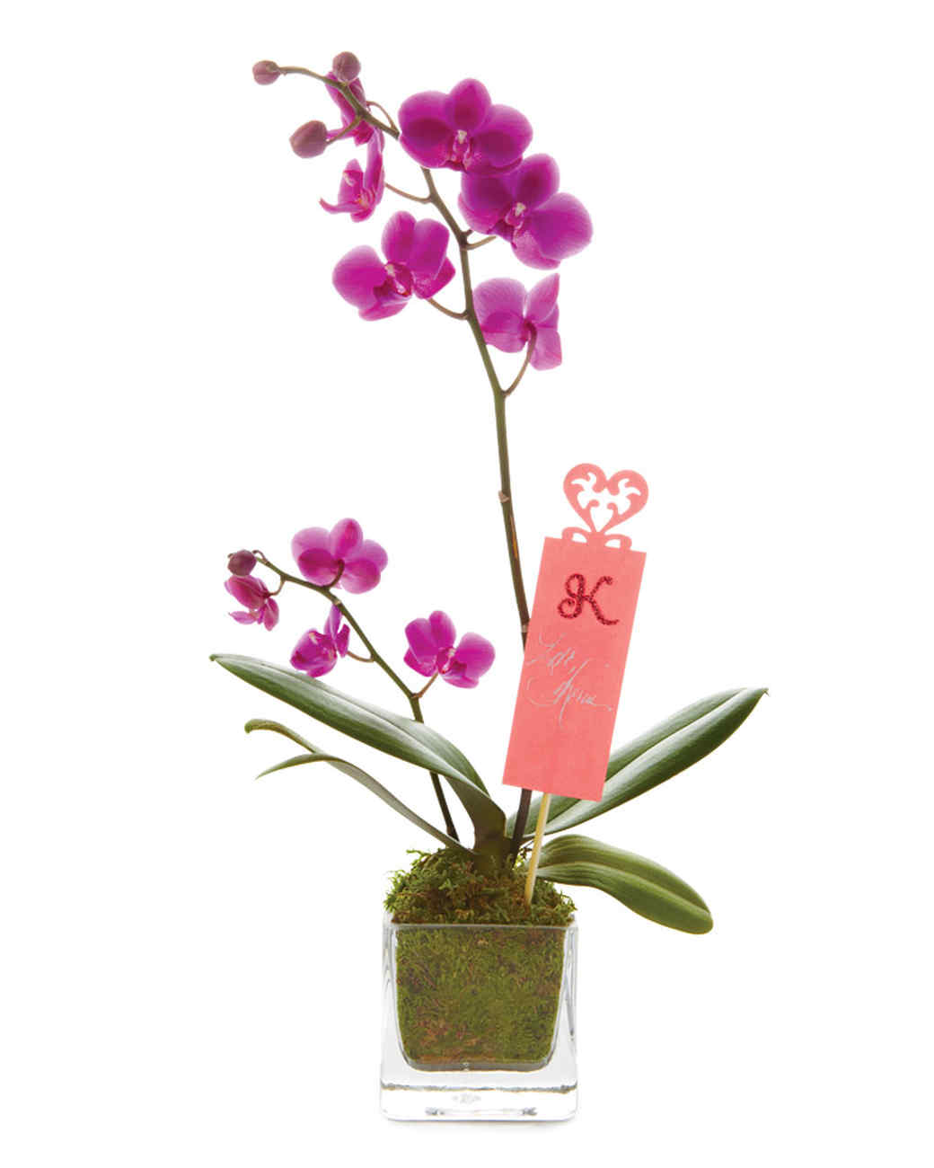 personalized gift tag tied onto orchid