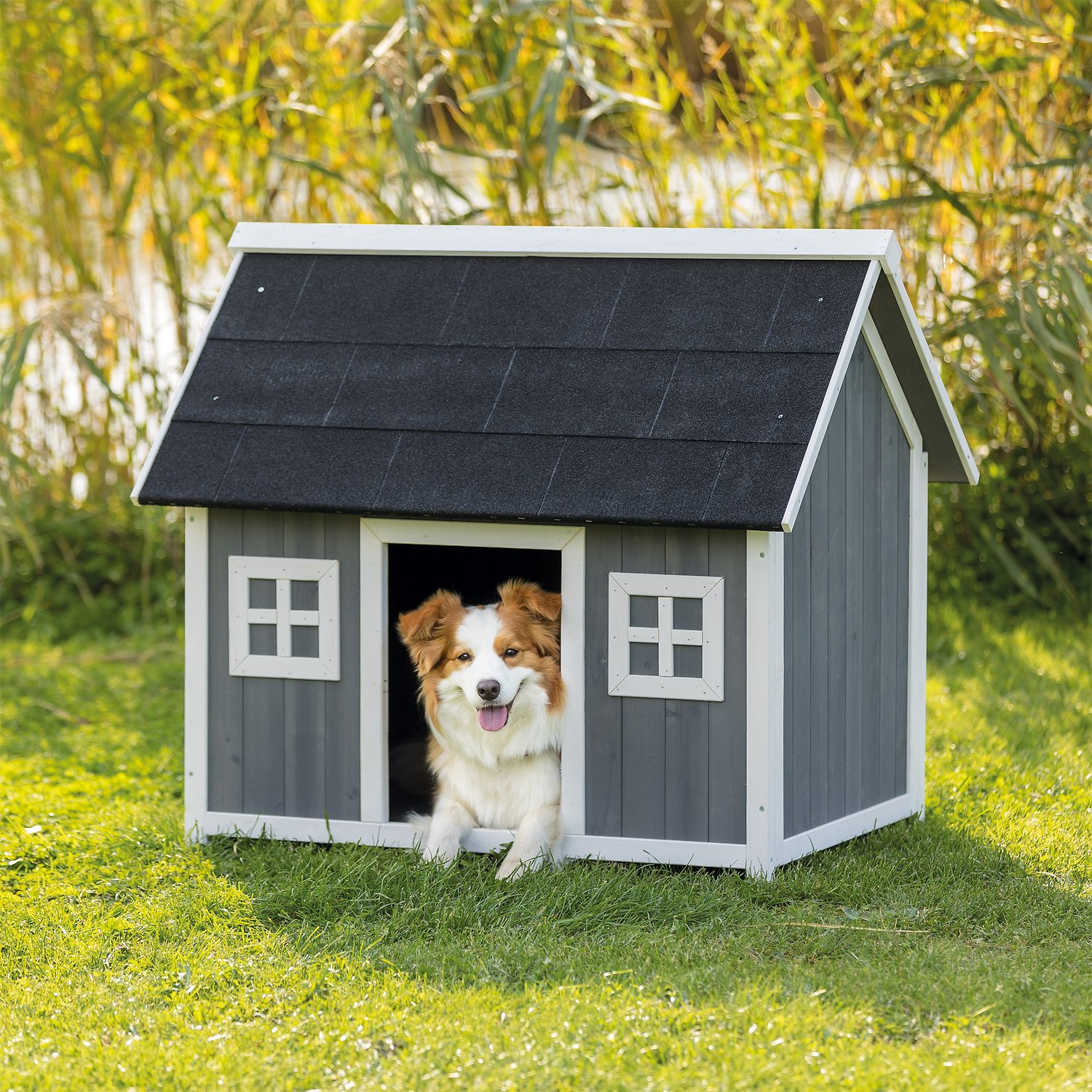 barn-style dog house