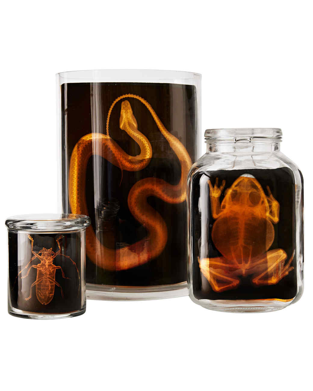 glass jars with images of animal x-rays