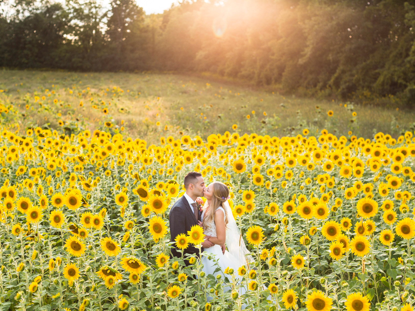 couple kissing in field of sunflowers