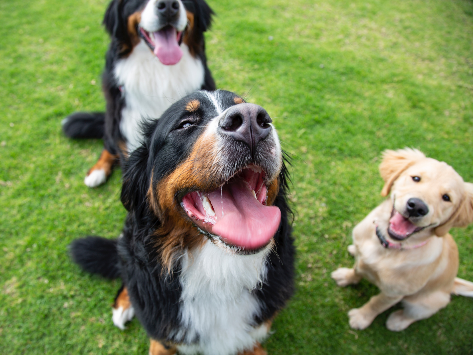 three dogs at a grassy park outside